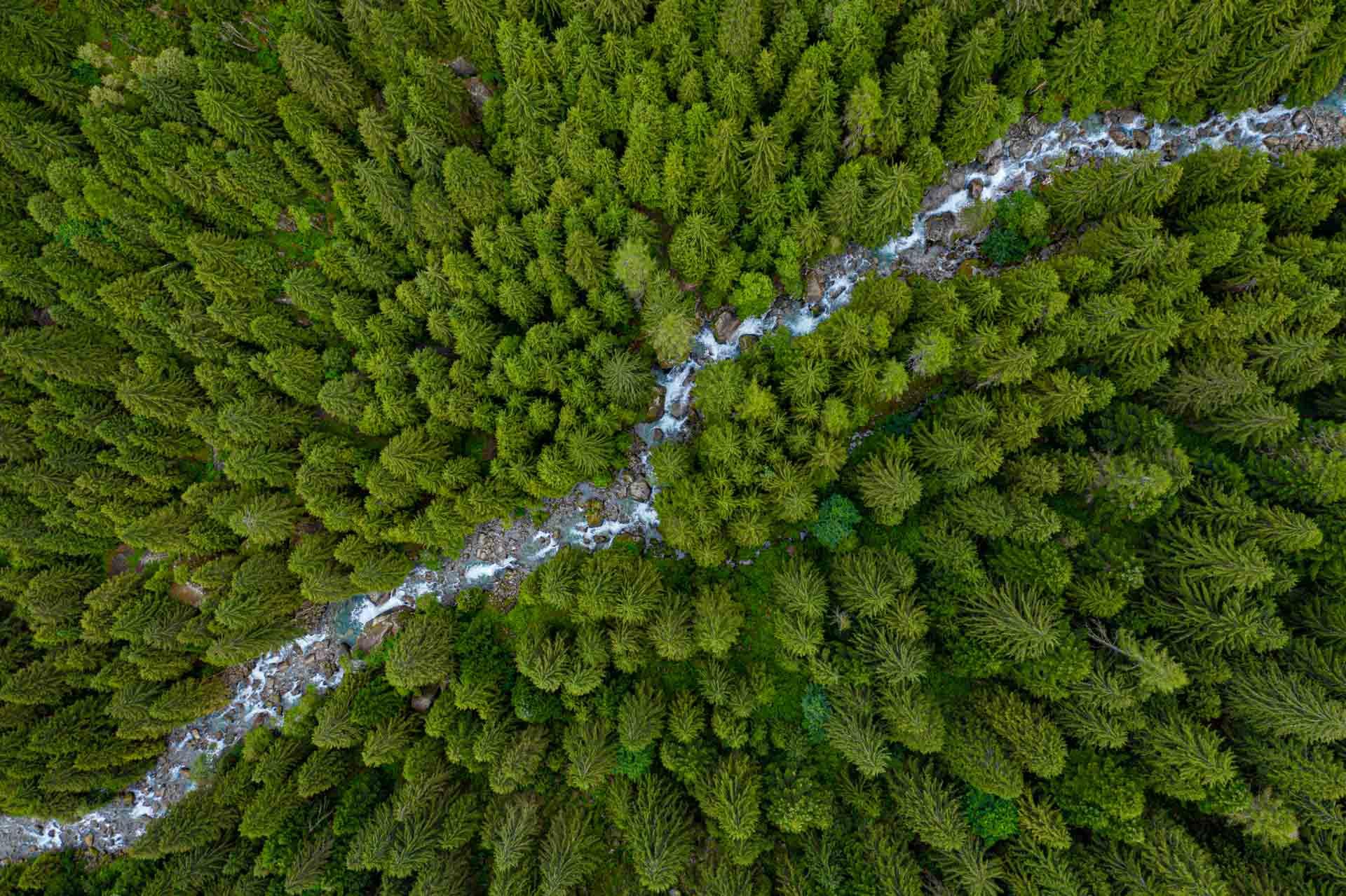 Val di Mello Italy Forest Drone