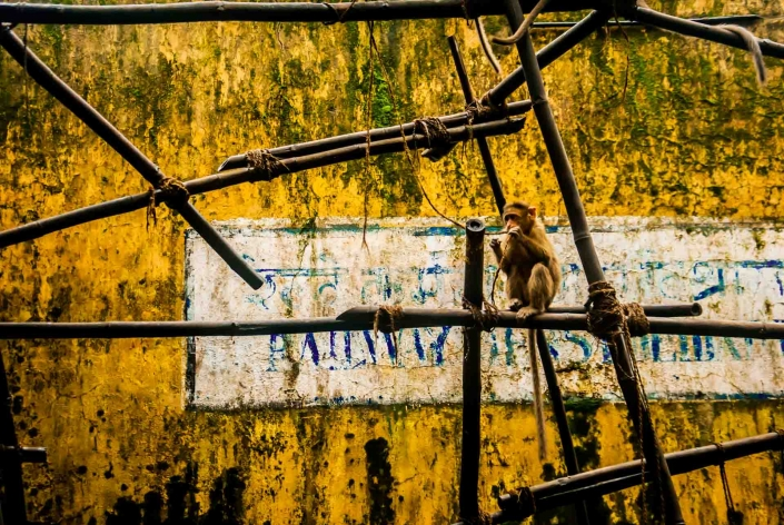 World PescArt Photo - Monkey business, Mumbai, India
