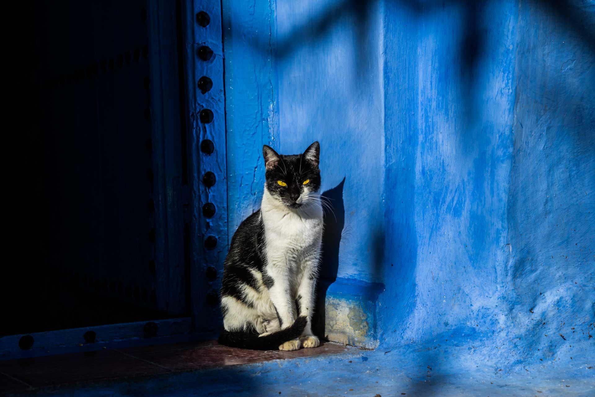 Morocco Chefchaouen blue cat, morocco, chefchaouen, , pescart, photo blog, travel blog, blog, photo travel blog, enrico pescantini, pescantini
