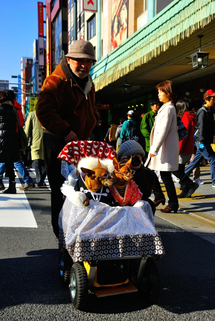 Tokyo, Japan - kimono dogs