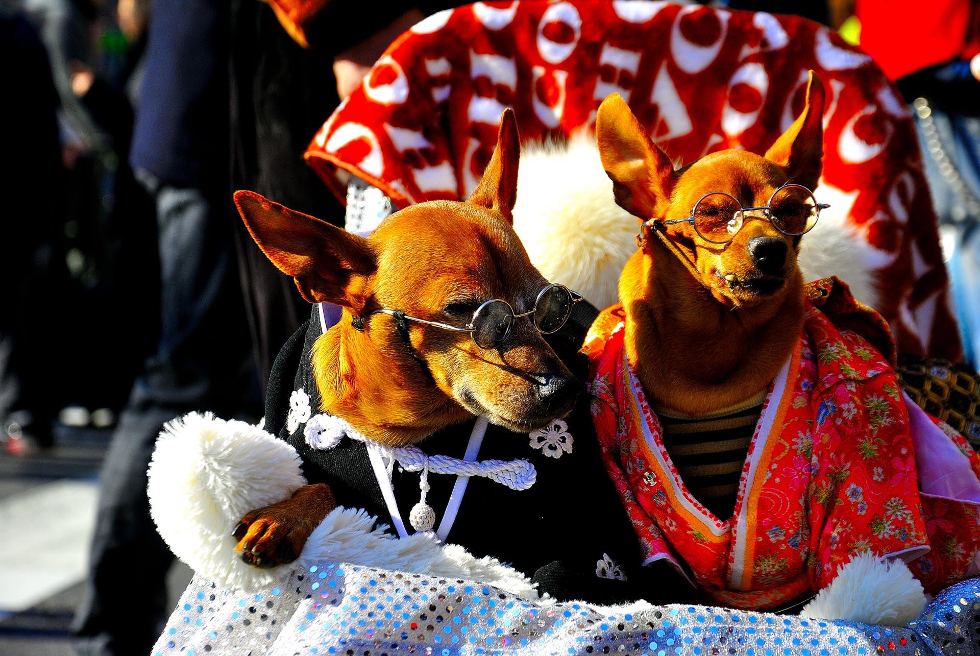 Tokyo, Japan - kimono dogs 2
