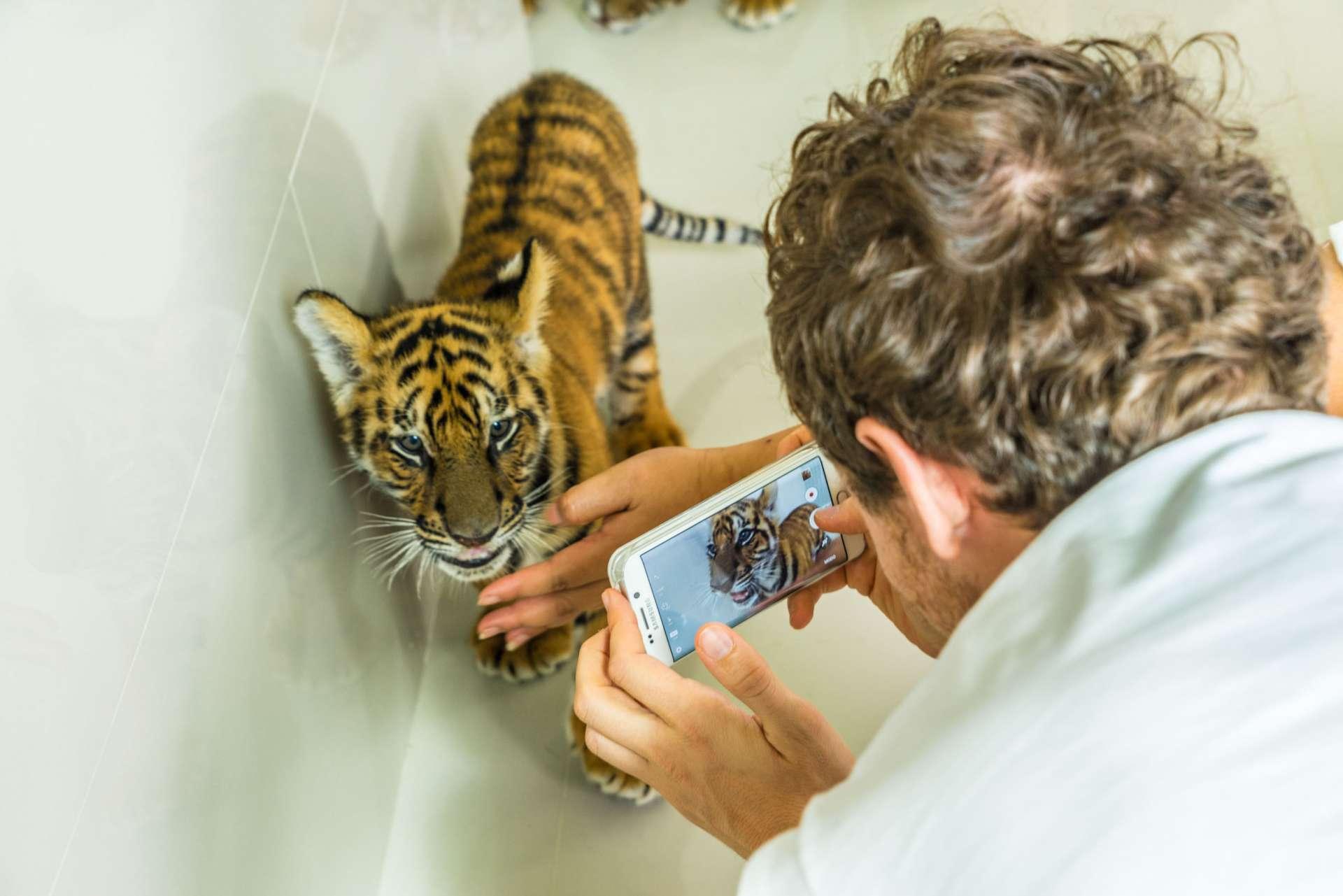 Damnoen Saduak Tiger Zoo Bangkok 2