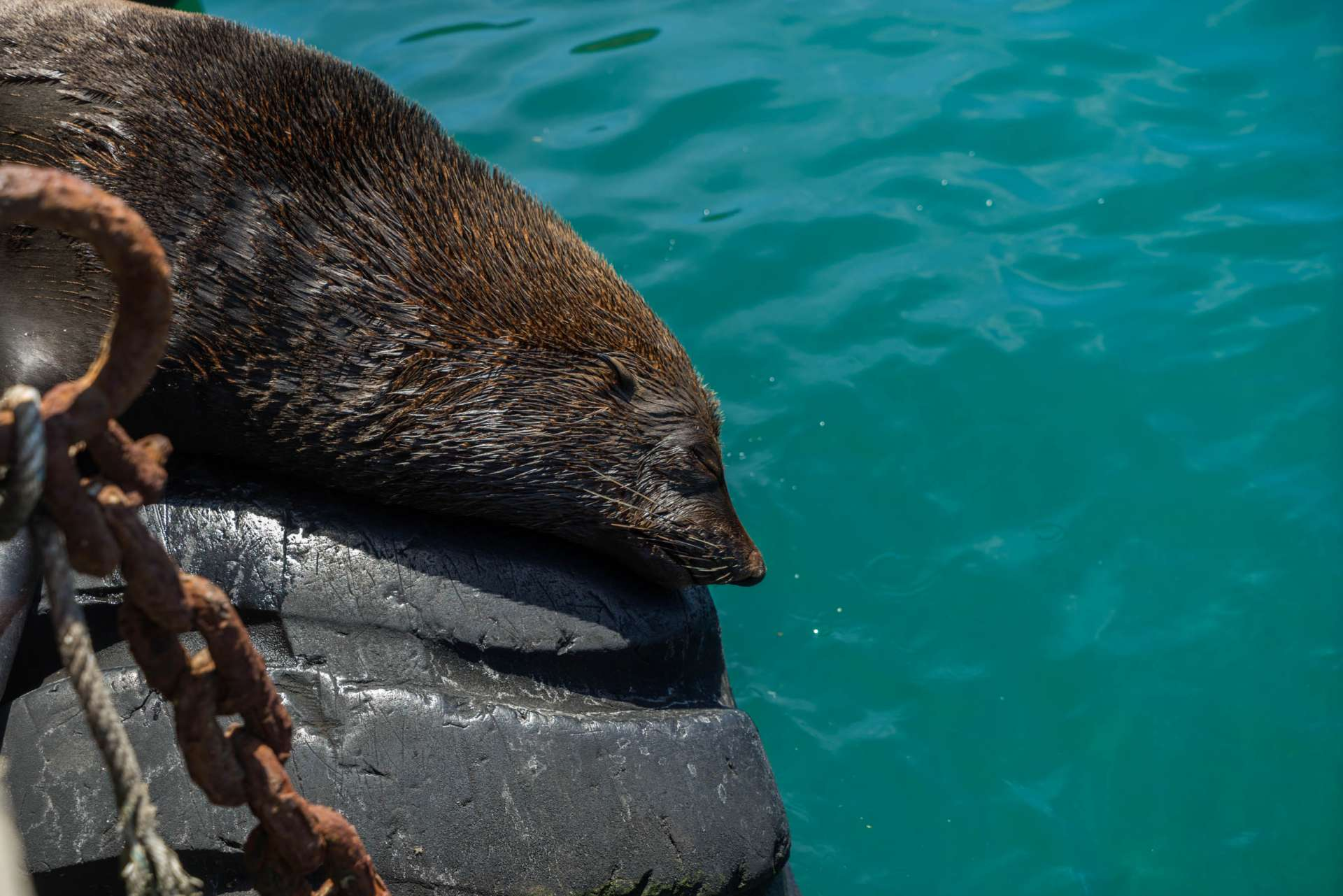 Cape Town Seals Pescart Enrico Pescantini