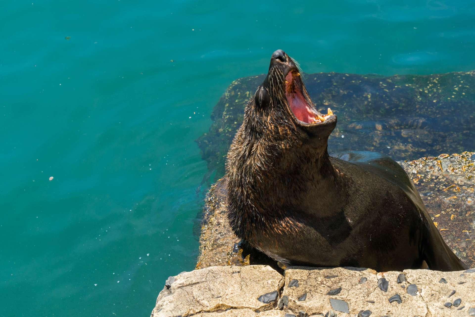Cape Town Seals Pescart Enrico Pescantini 6