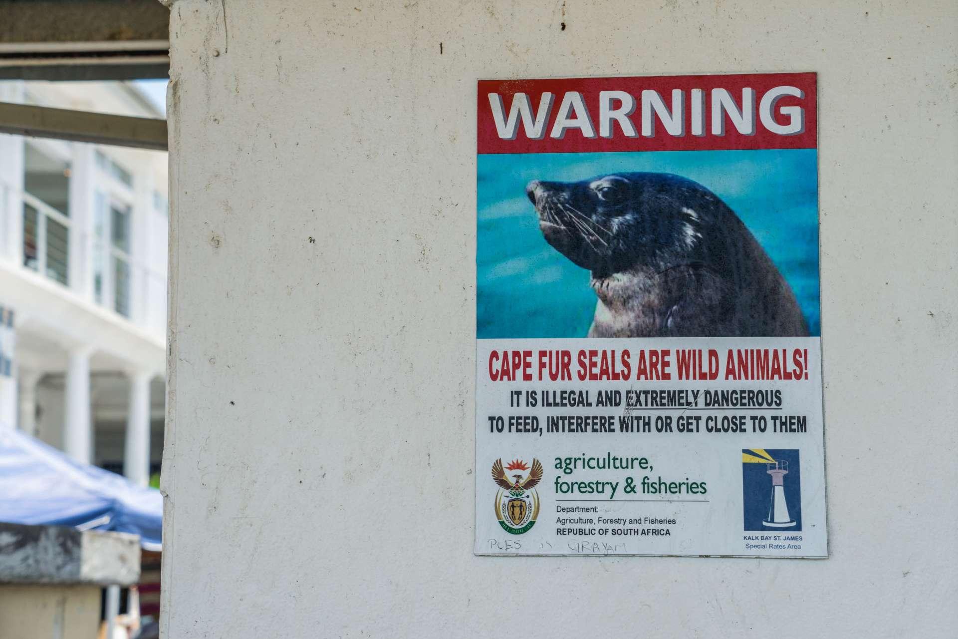 Cape Town Seals Pescart Enrico Pescantini 8