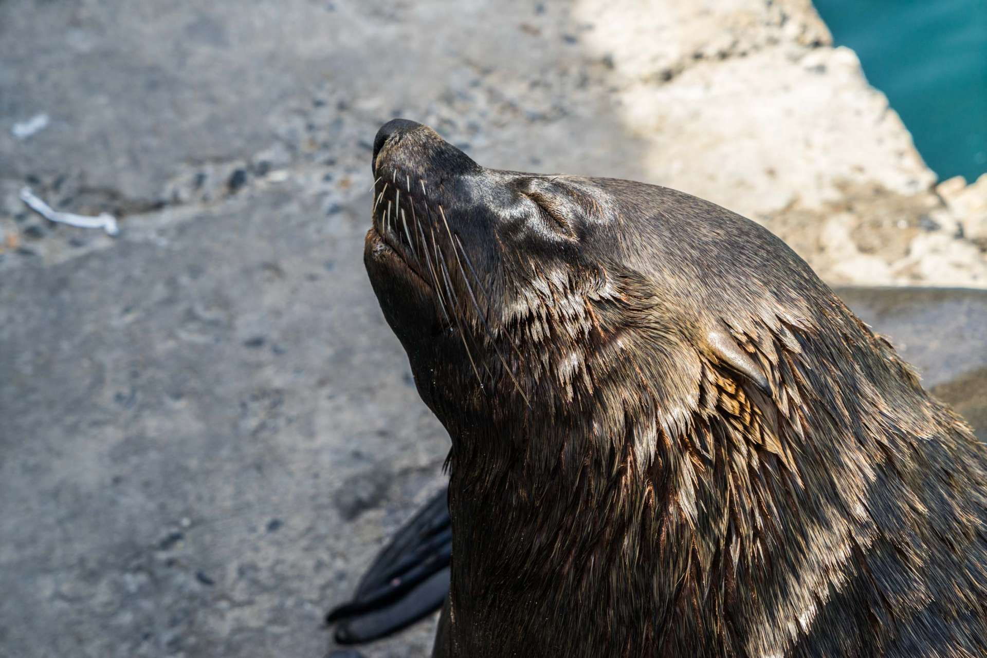 Cape Town Seals Pescart Enrico Pescantini 9