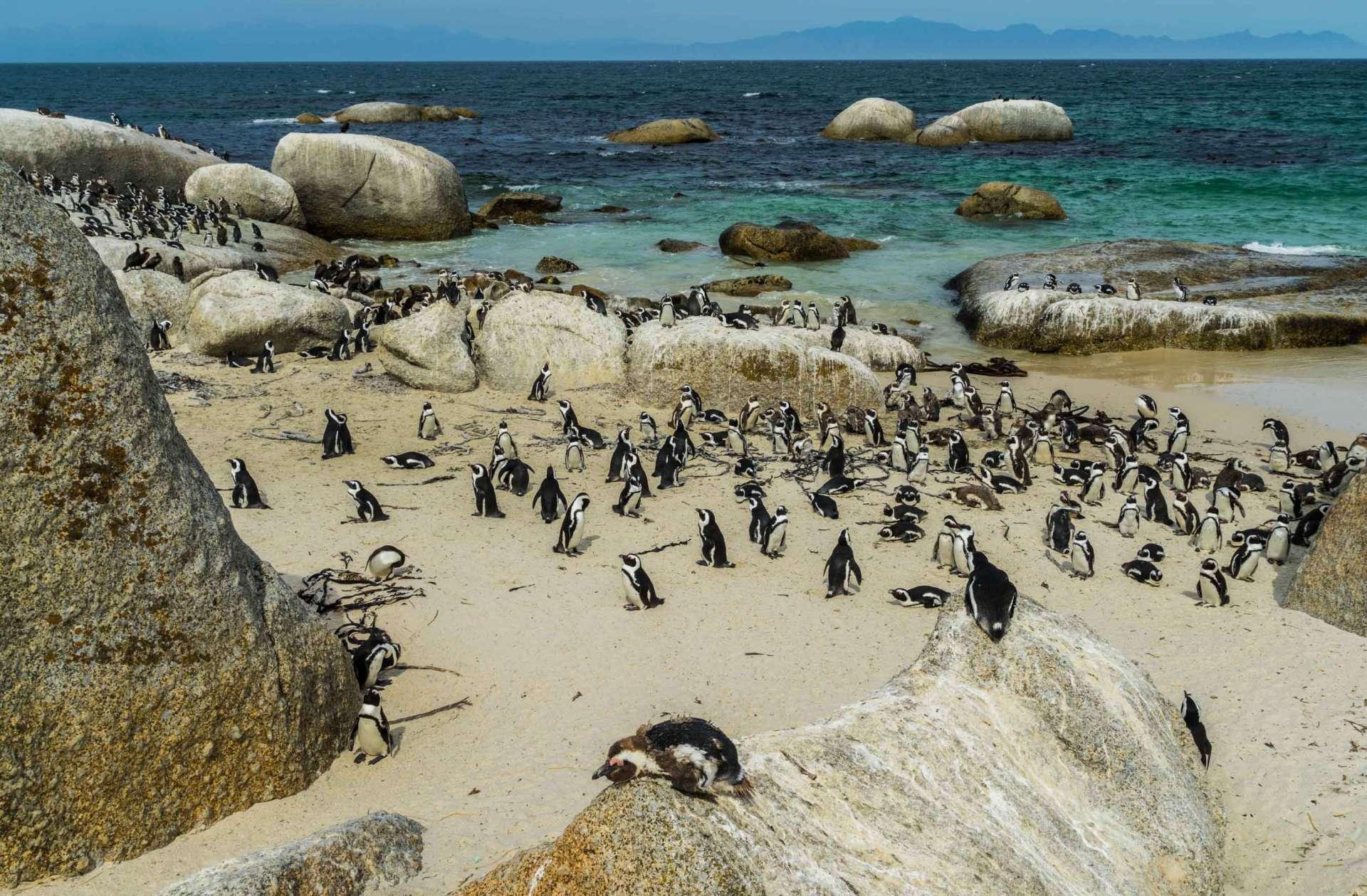 Cape Town Boulders Beach Pescart Enrico Pescantini 2