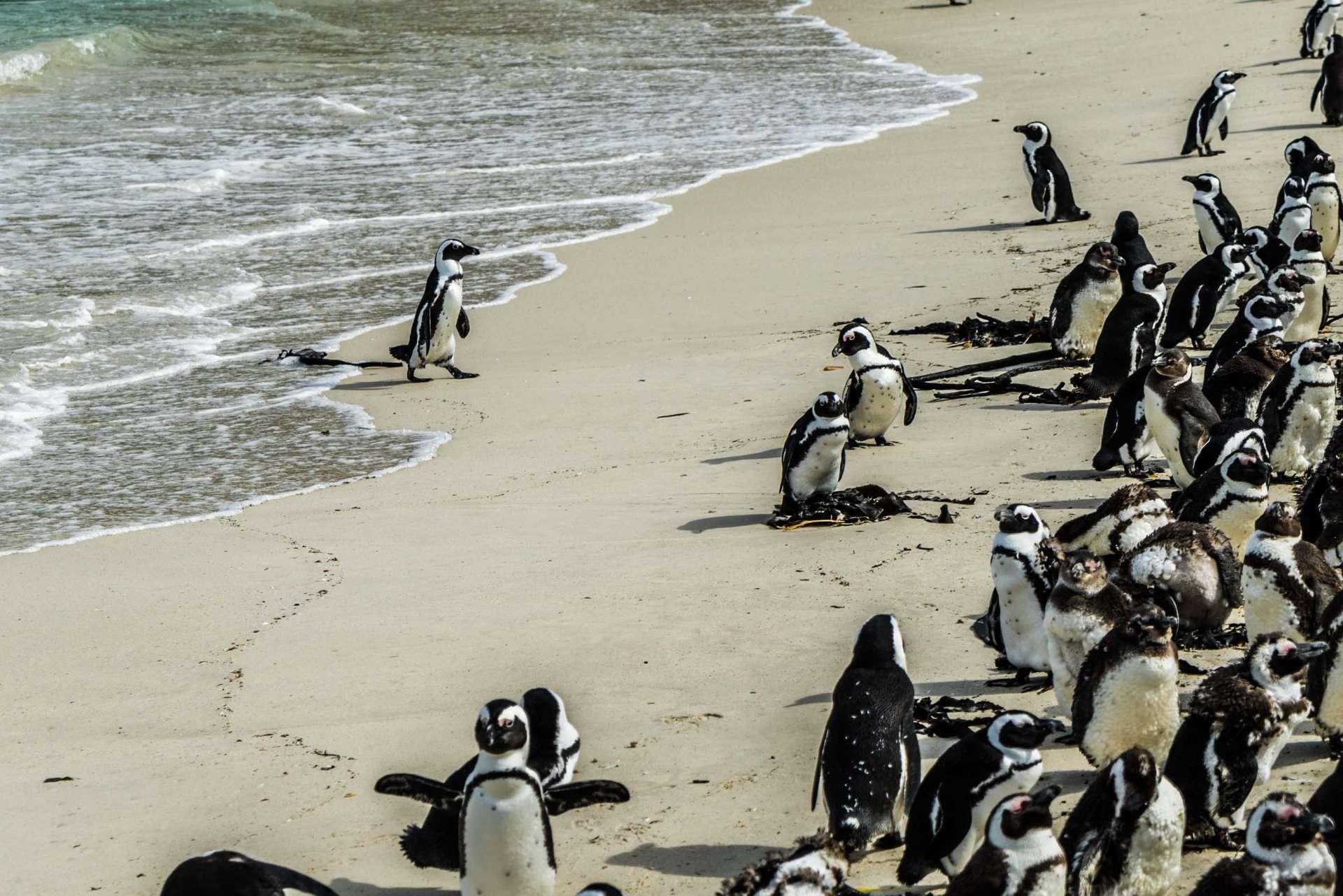 Cape Town Boulders Beach Pescart Enrico Pescantini 4