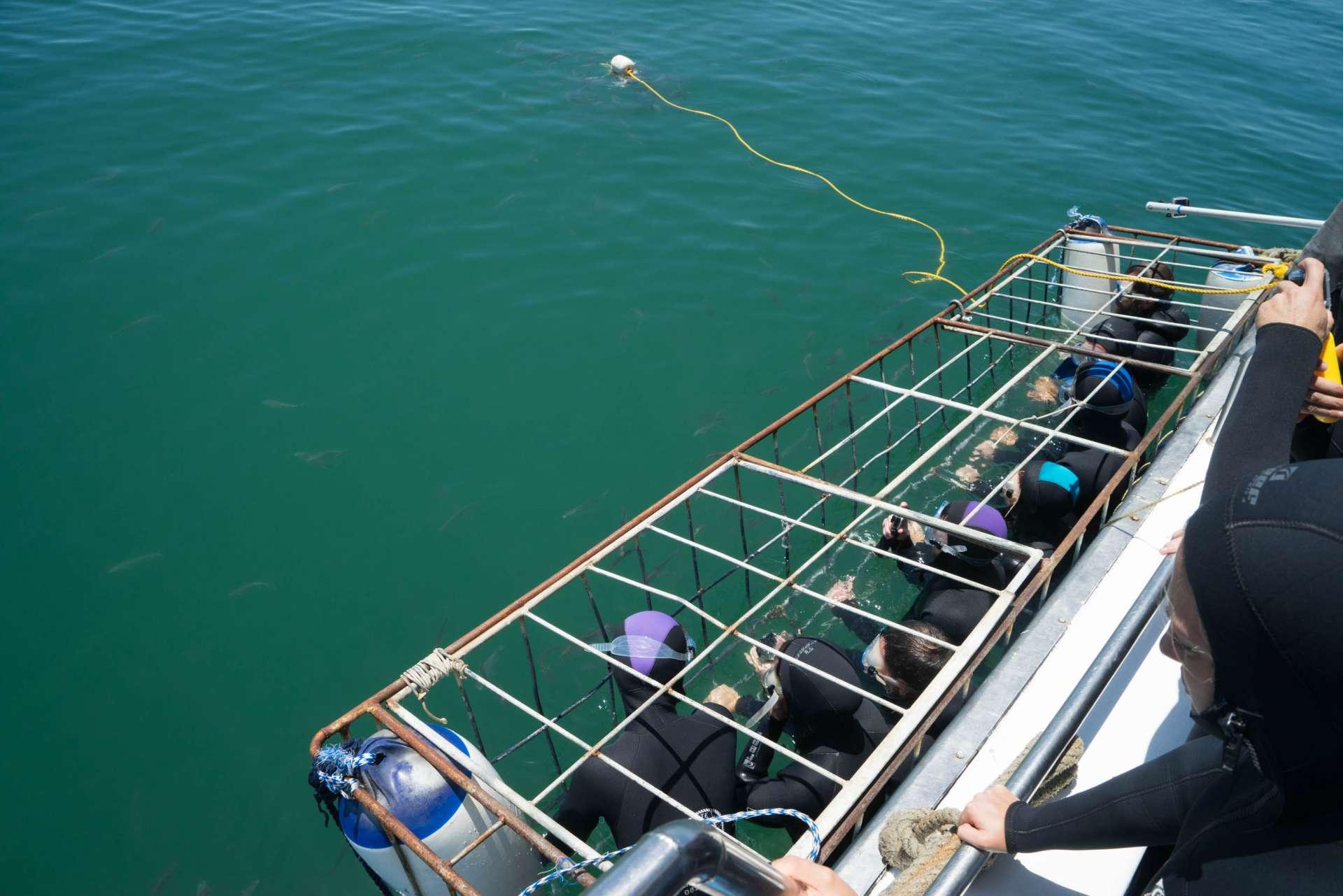 Cape Town White Shark Diving Pescart Enrico Pescantini