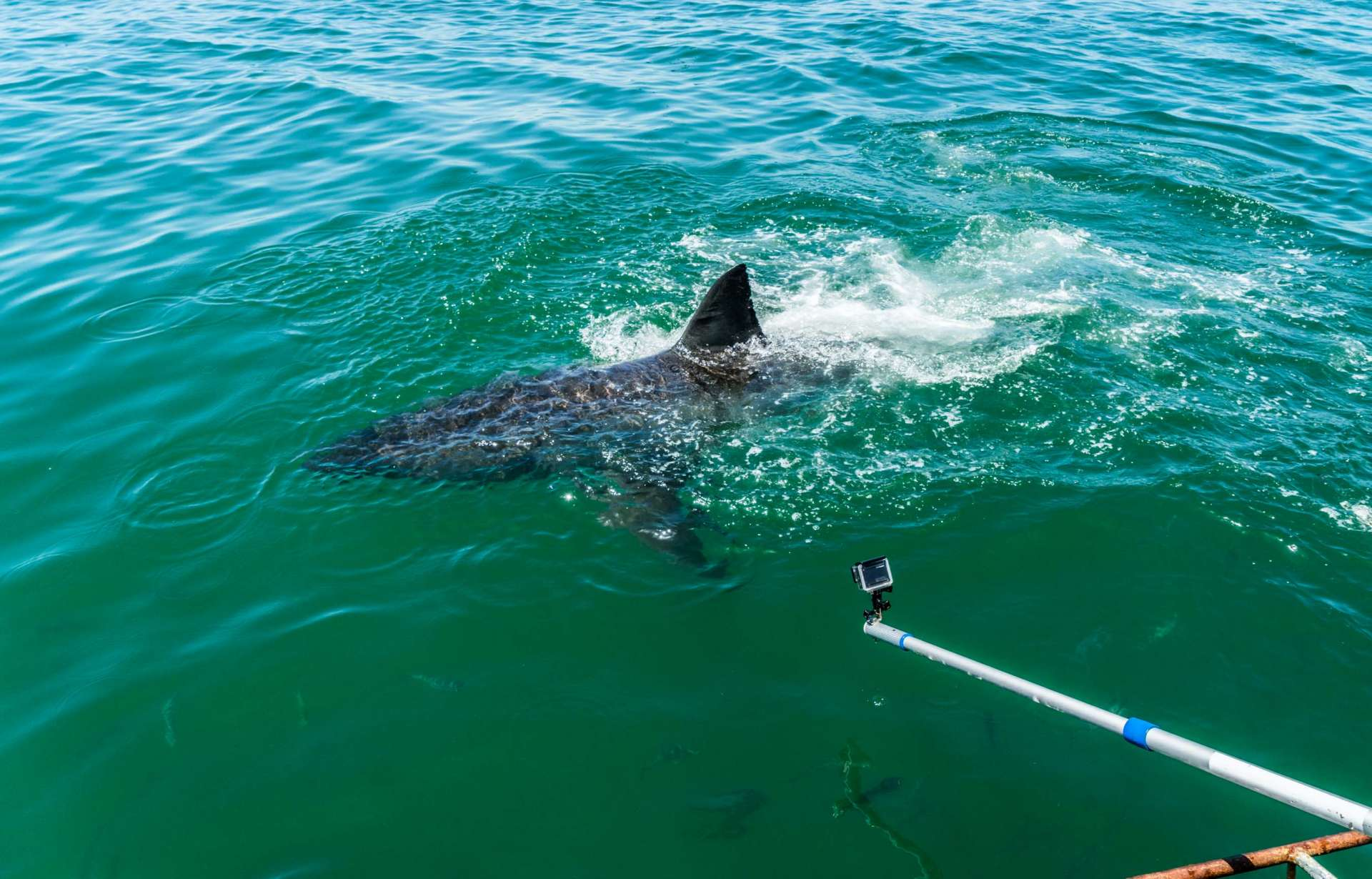 Cape Town White Shark Diving Pescart Enrico Pescantini 4