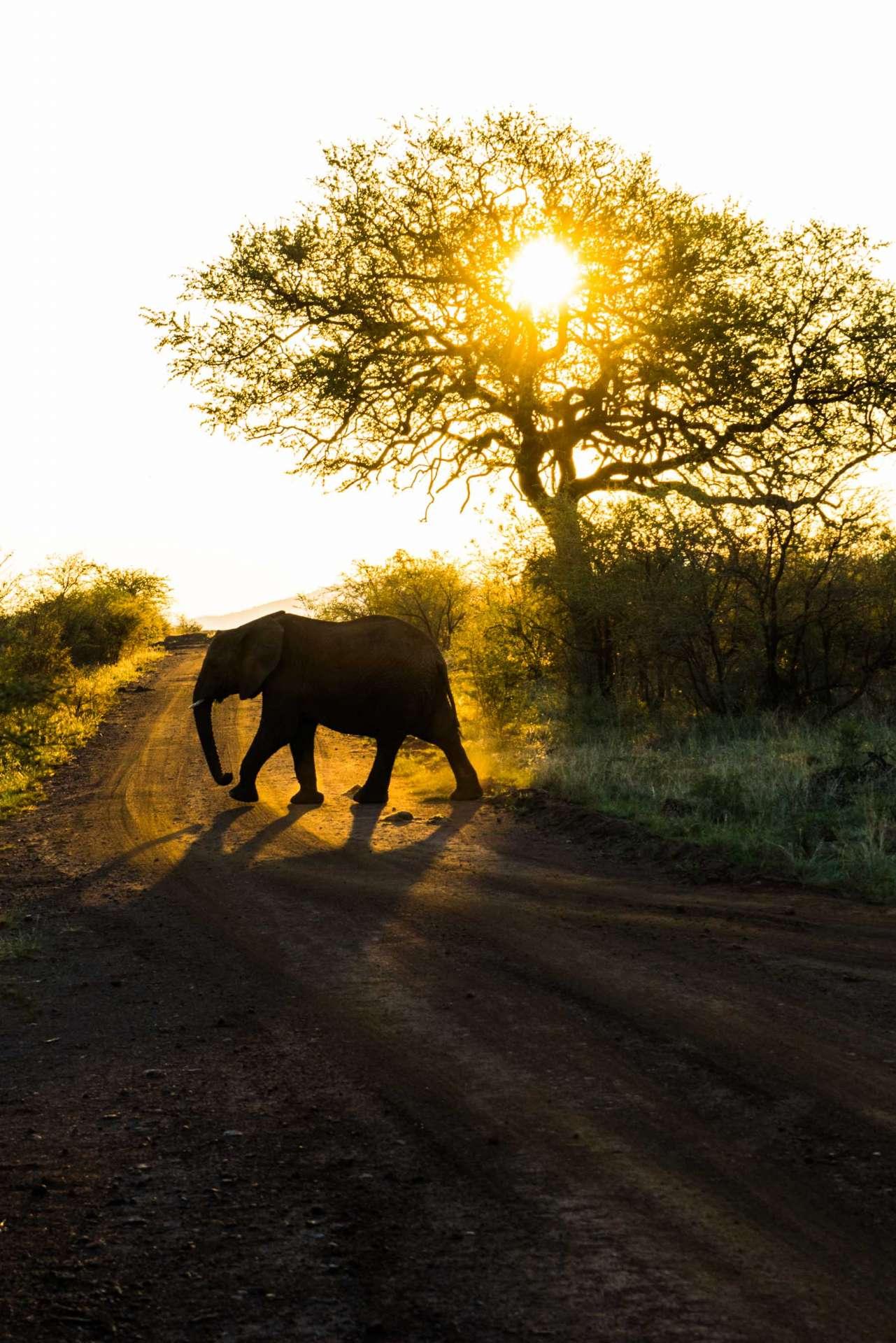 south africa madikwe safari pescart mosetlha bush camp elephant 2