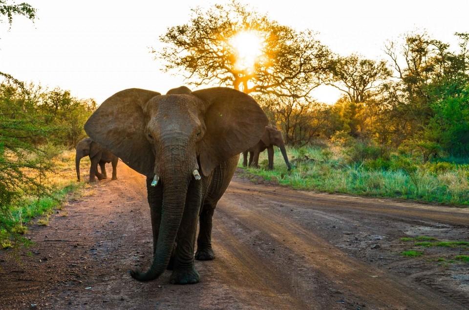 South African Safari: wildlife encounters in malaria-free Madikwe Game Reserve