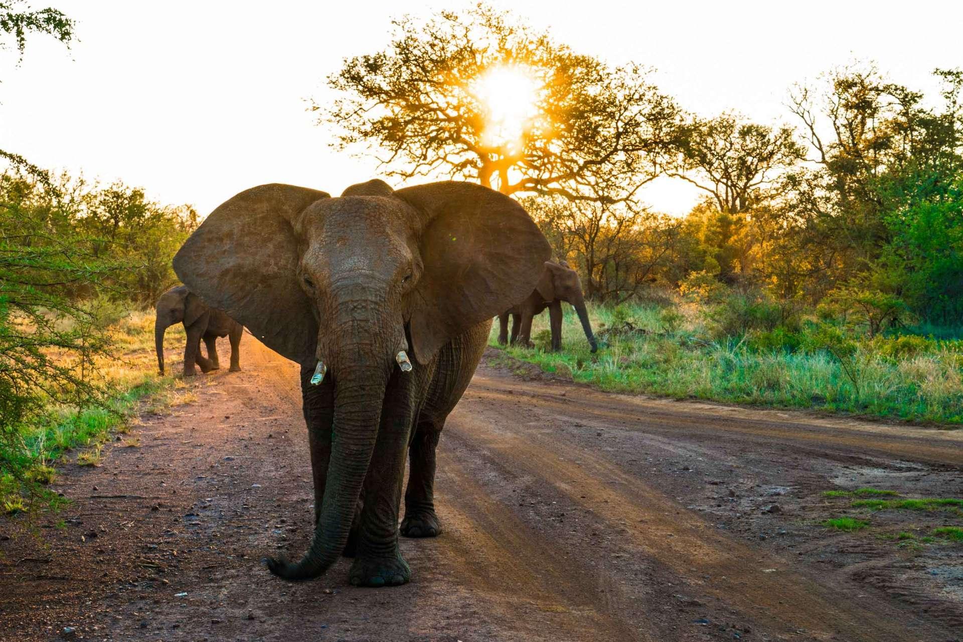 south africa madikwe safari pescart mosetlha bush camp elephant