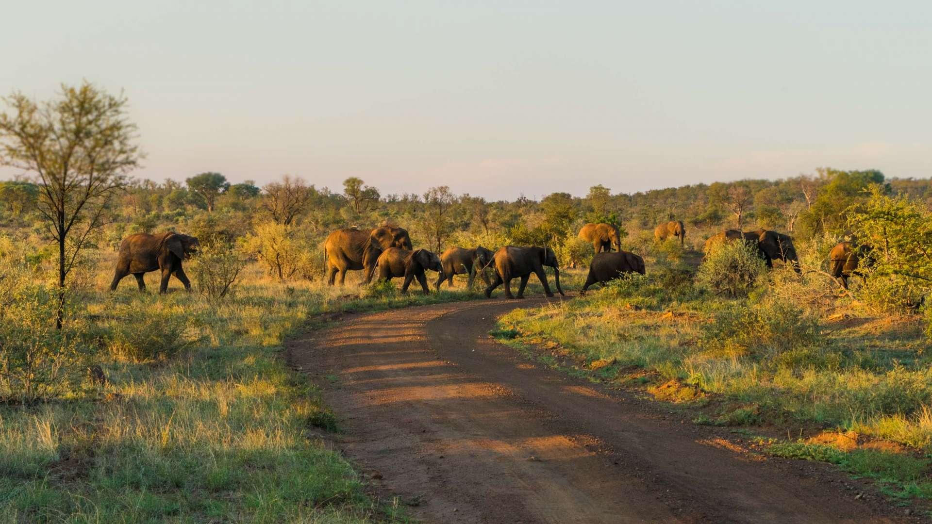 south africa madikwe safari pescart mosetlha bush camp elephant pack