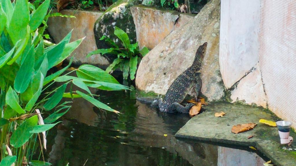 Tioman Island Malaysia Pescart Travel Photo Blog Enrico Pescantini japamala resort giant lizard 2