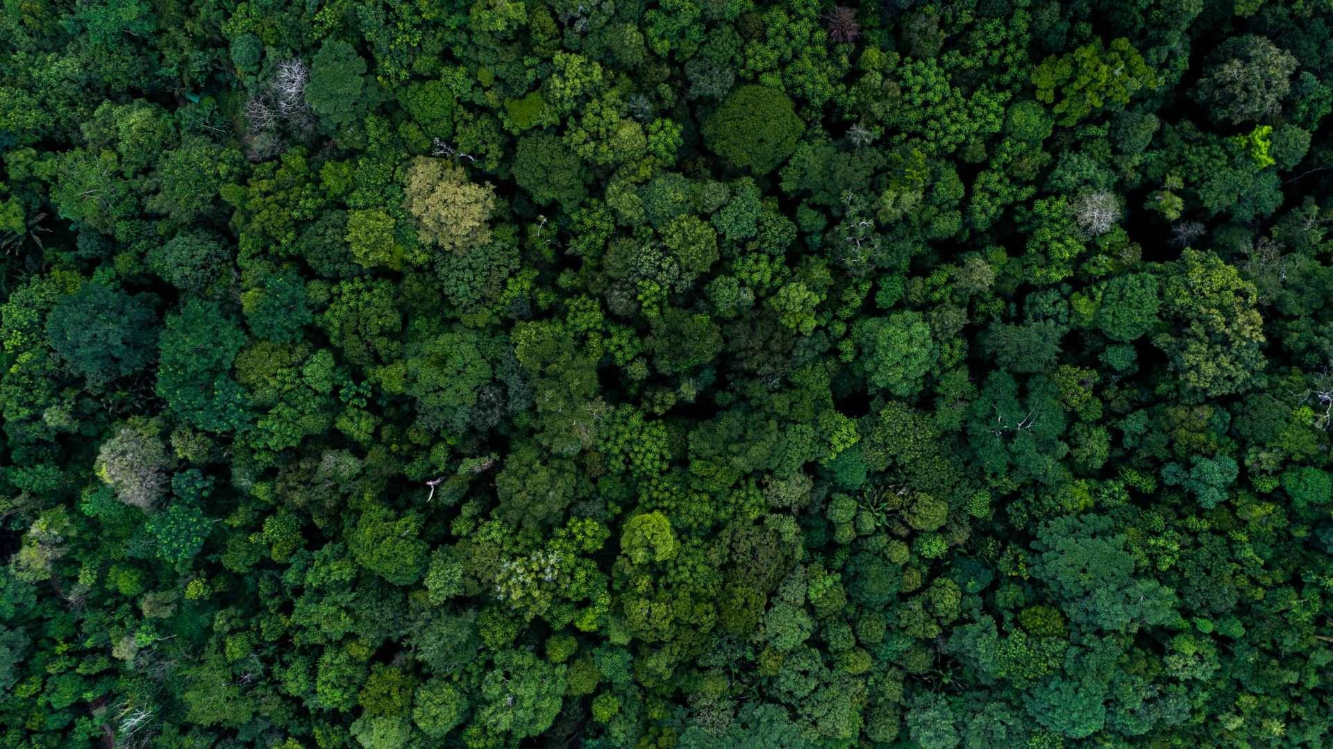 Jungle Broccoli Costa Rica From Above Enrico Pescantini