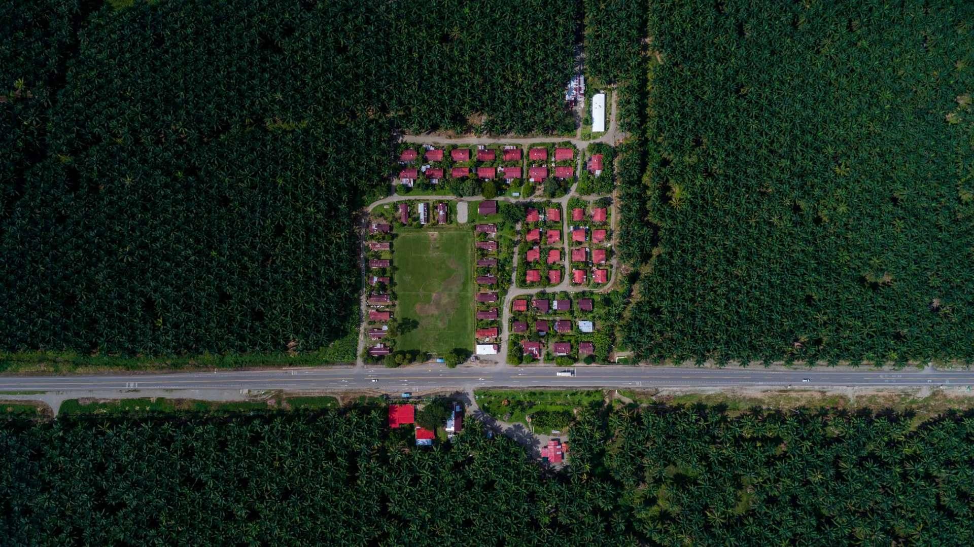Palm Plantation Costa Rica From Above Enrico Pescantini 2