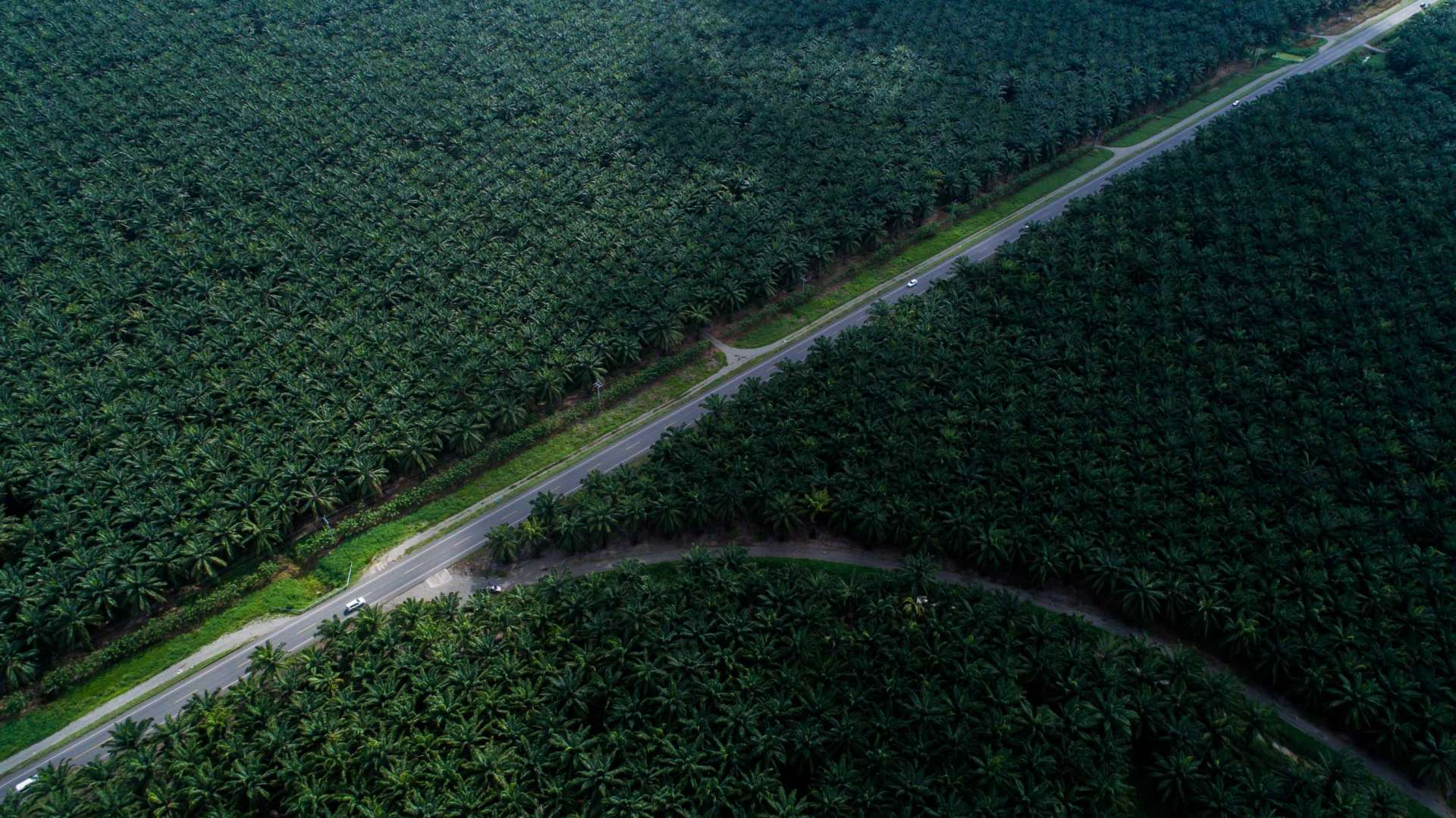 Palm Plantation Costa Rica From Above Enrico Pescantini 4