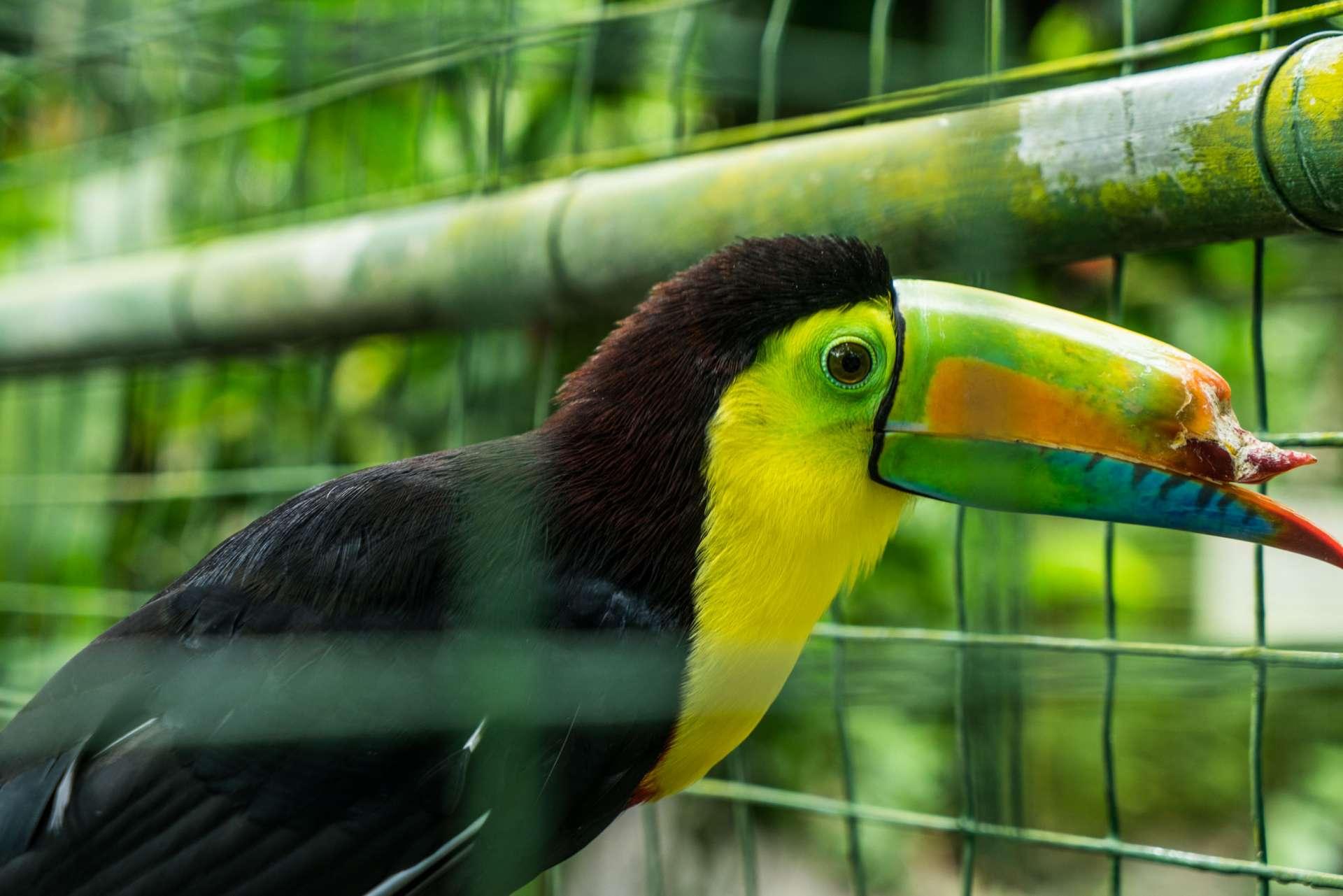 Costa Rica Enrico Pescantini Projecto Asis 3
