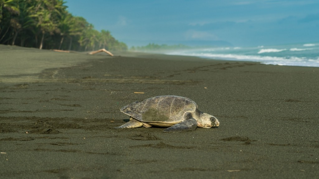 corcovado carate turtle nesting