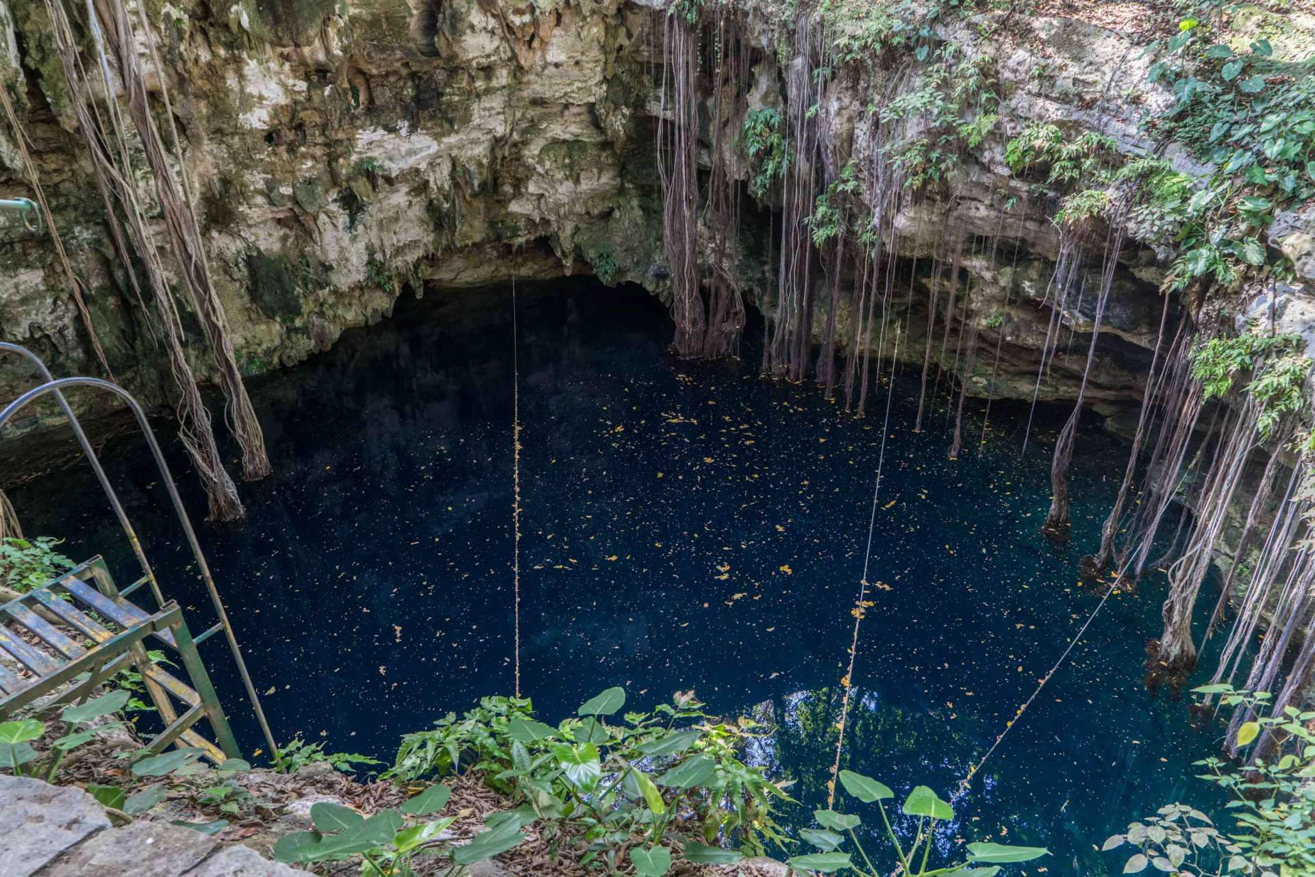Cenote LOL-HA yucatan mexico