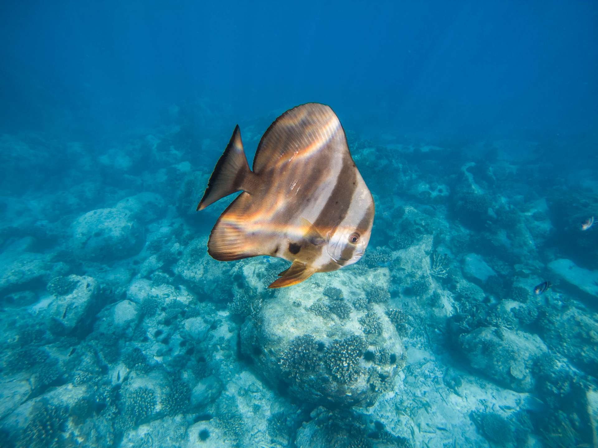 Coco island Seychelles travel photography underwater snorkeling enrico pescantini.GPR