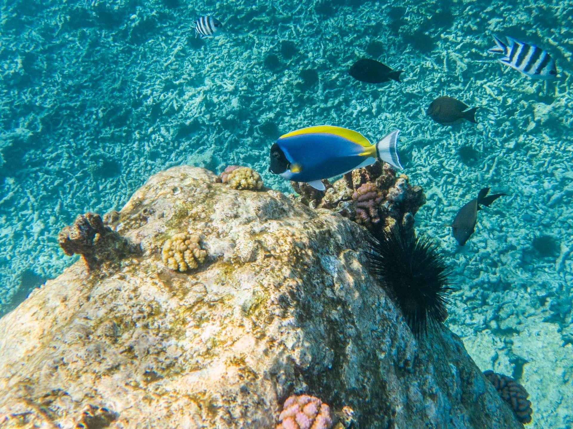 Coco island Seychelles travel photography underwater snorkeling enrico pescantini.GPR