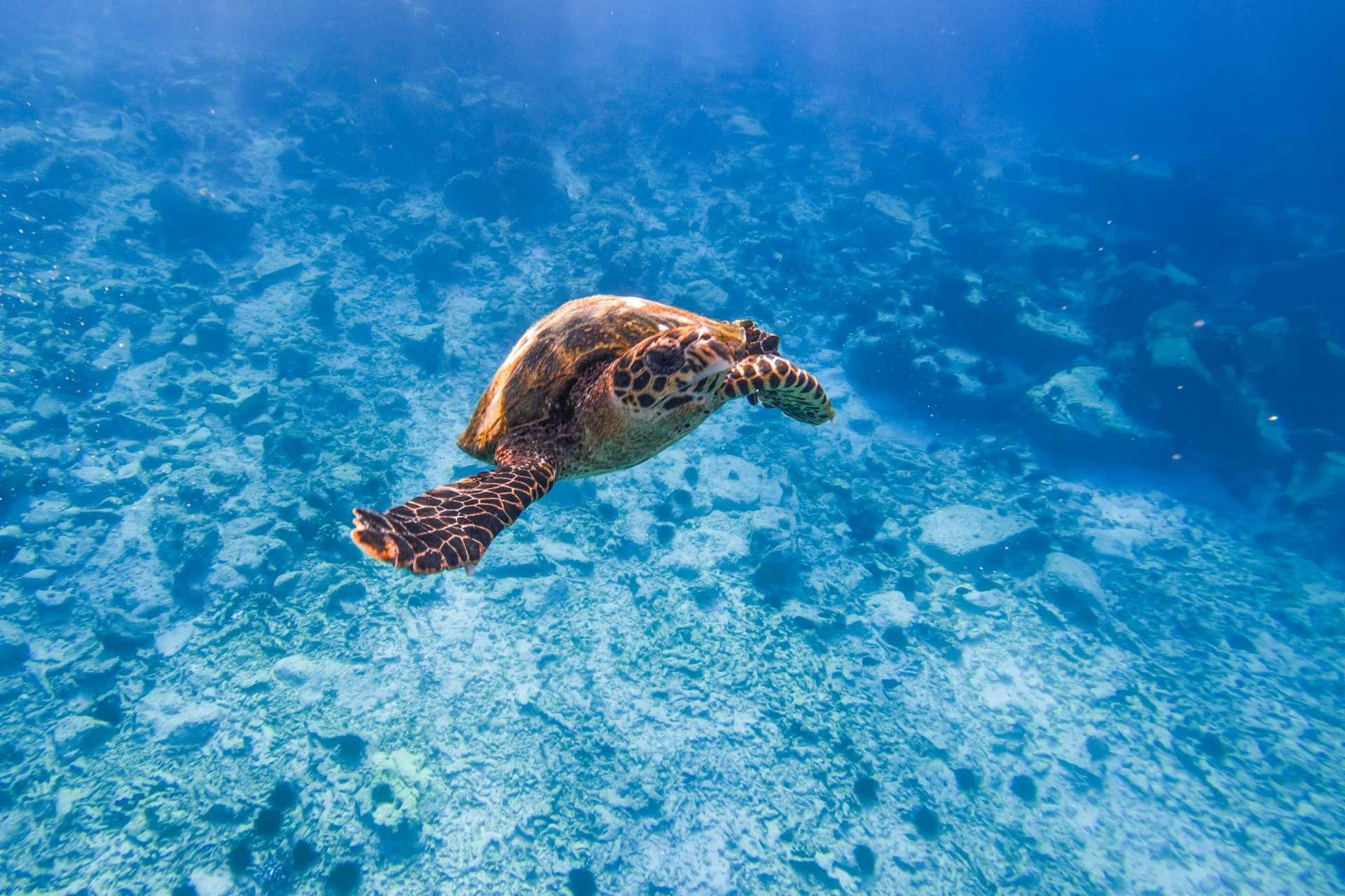 Coco island Seychelles travel photography underwater snorkeling enrico pescantini.GPR.GPR