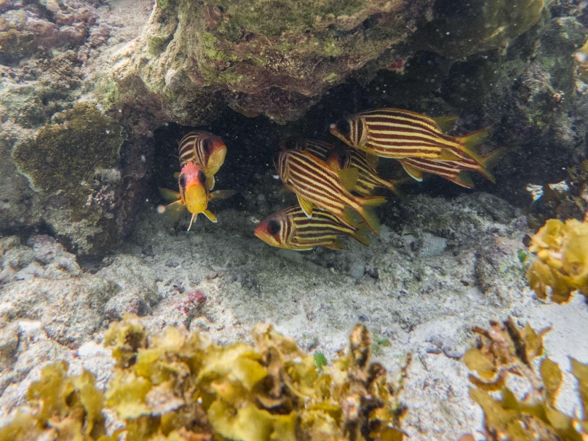 Anse Lazio Seychelles travel photography underwater snorkeling enrico pescantini.GPR.GPR