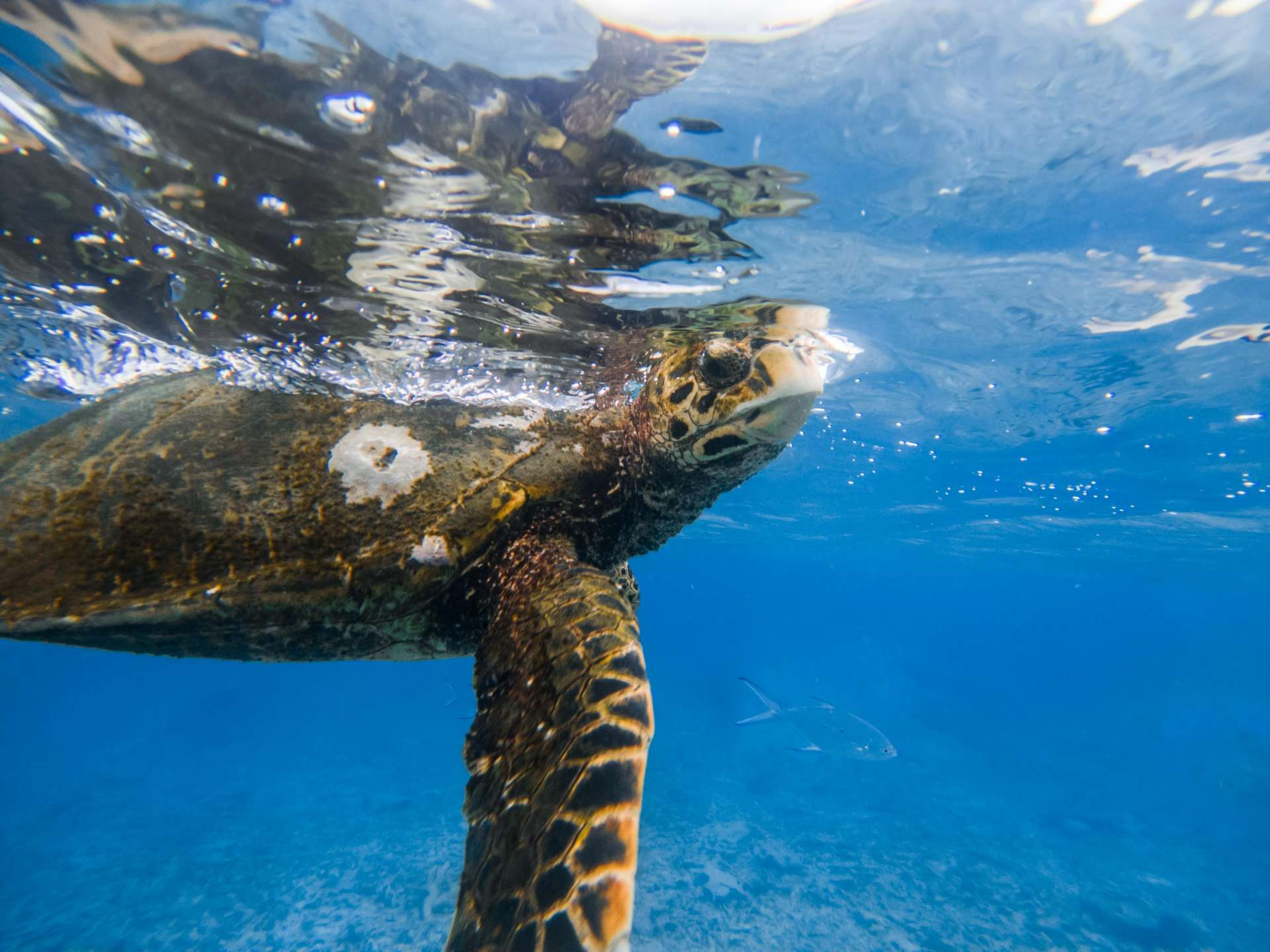 Snorkeling at St Pierre Island, Praslin Seychelles travel photography underwater snorkeling enrico pescantini