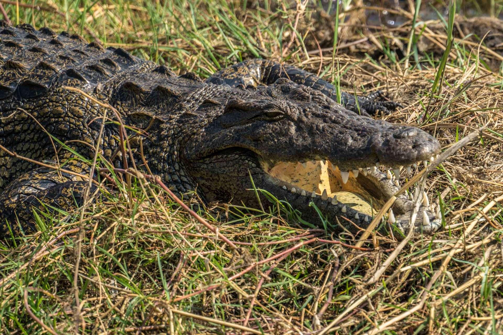 Victoria Falls Zimbawe Enrico Pescantini Chobe day trip crocodile