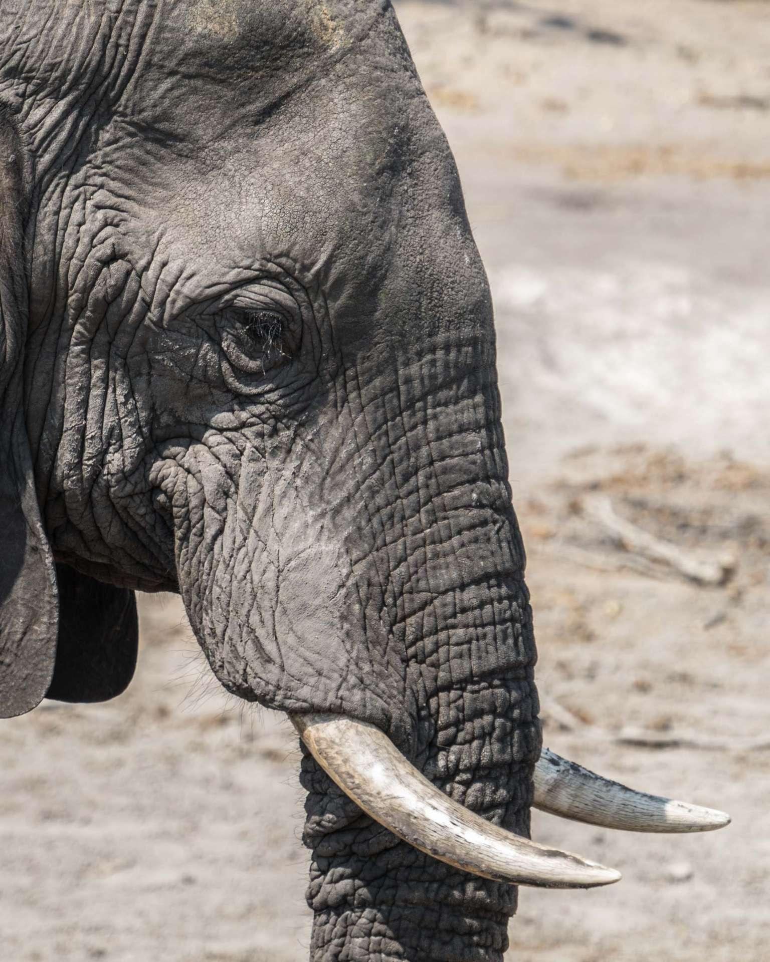 Victoria Falls Zimbawe Enrico Pescantini Chobe day trip elephant close up