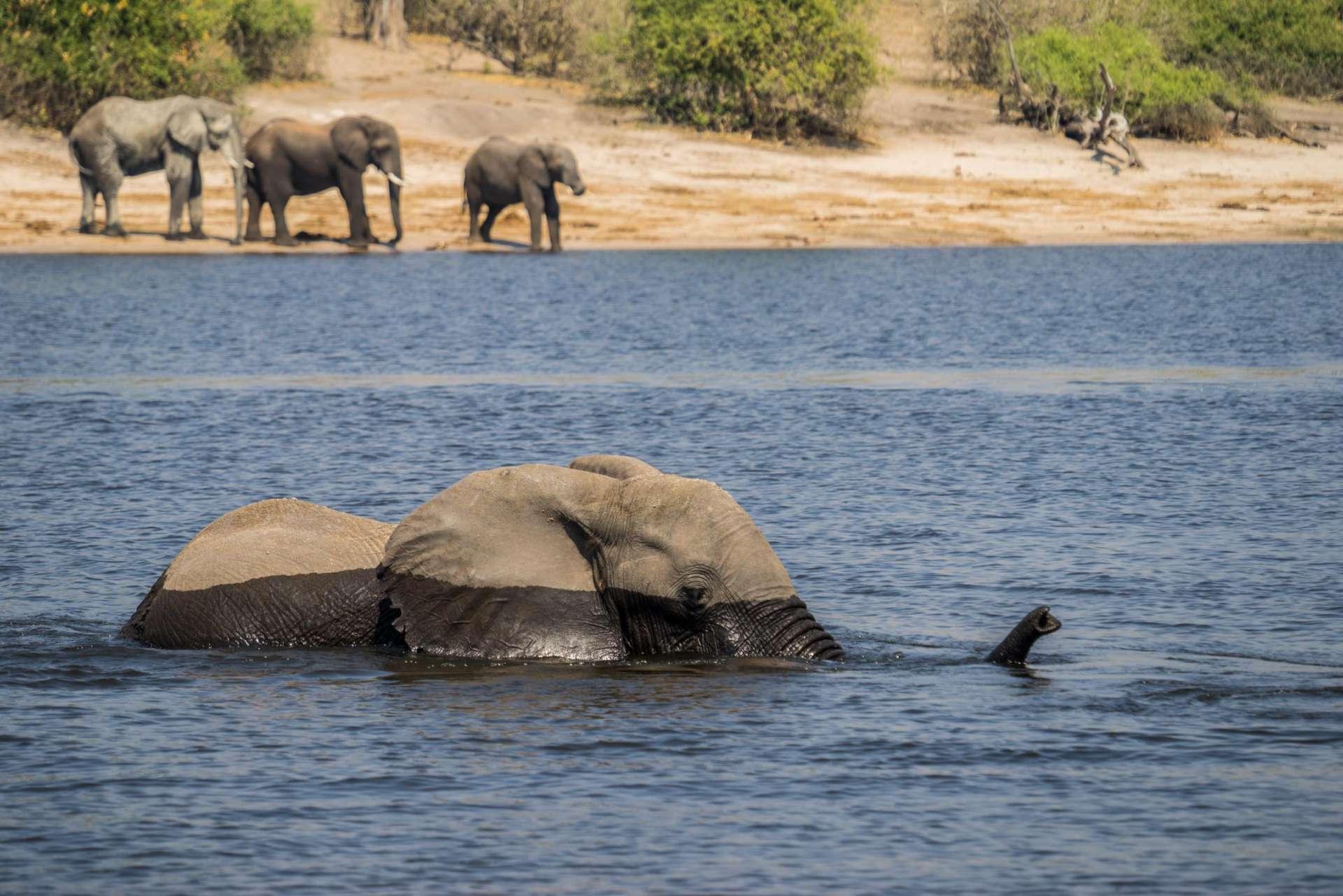 Victoria Falls Zimbawe Enrico Pescantini Chobe day trip elephant crossing river