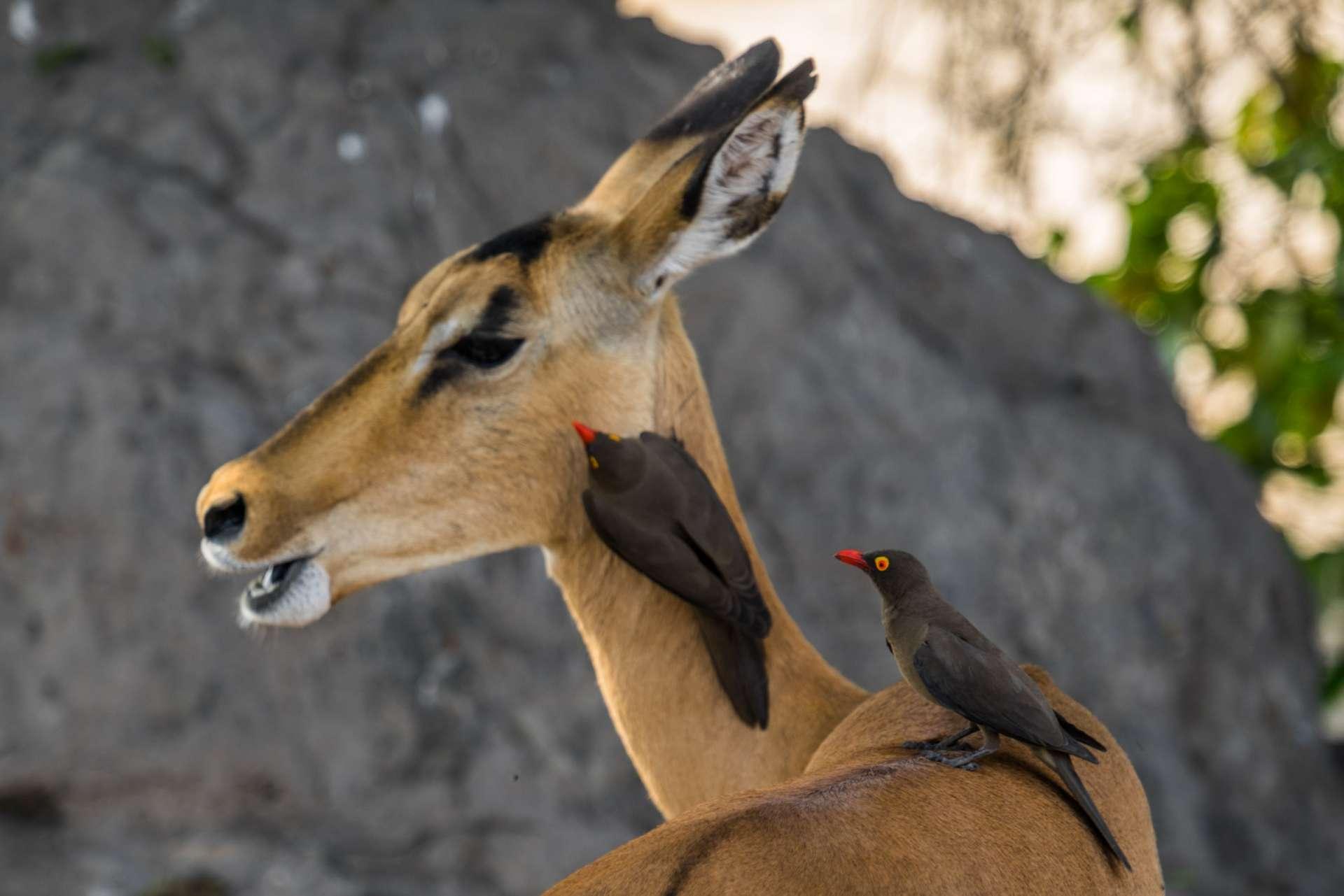 Victoria Falls Zimbawe Enrico Pescantini Chobe day trip safari