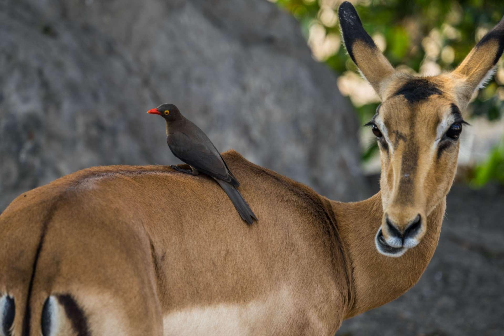 Victoria Falls Zimbawe Enrico Pescantini Chobe day trip safari 2