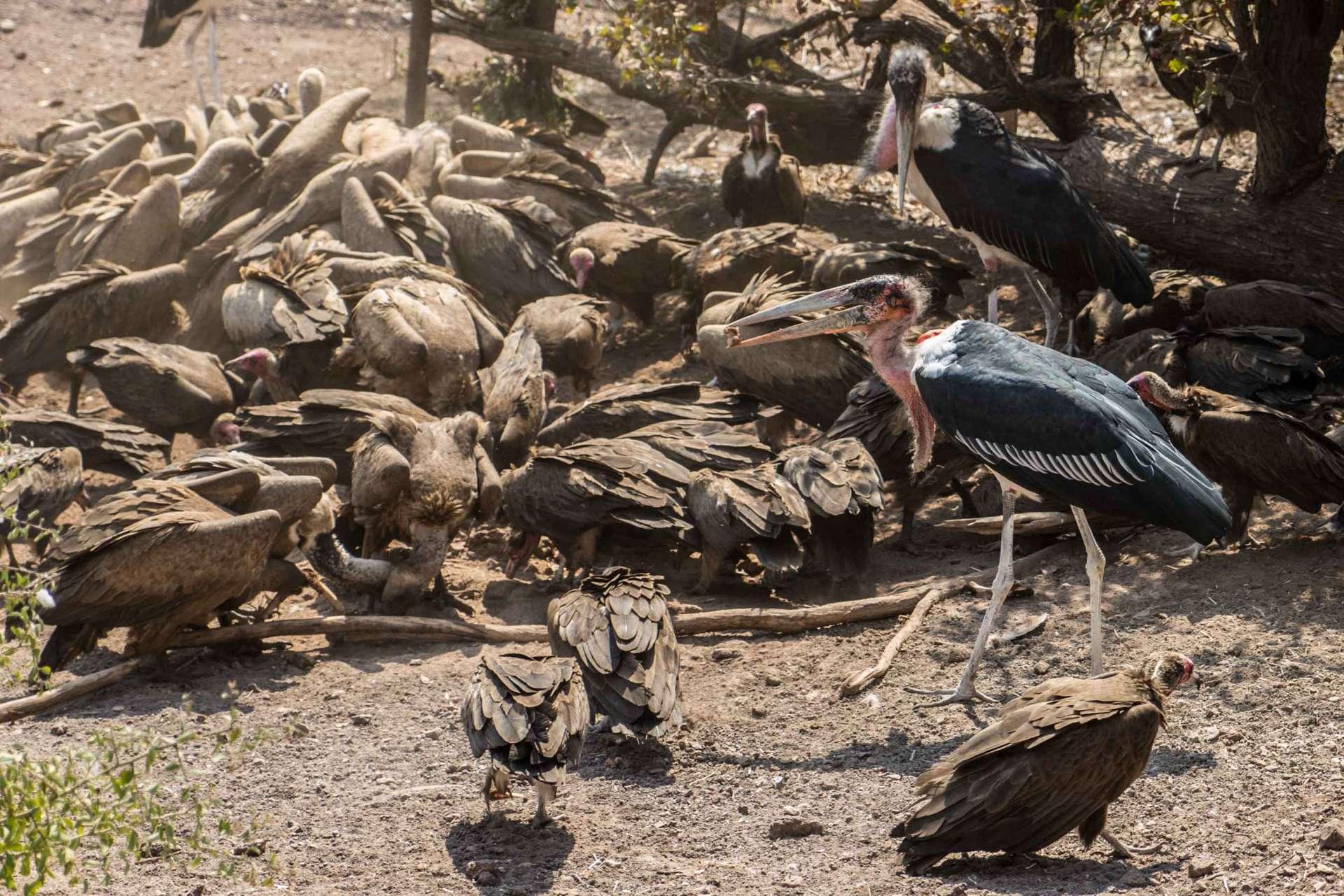 Victoria Falls Zimbawe Enrico Pescantini Victoria Falls Safari Lodge vultures