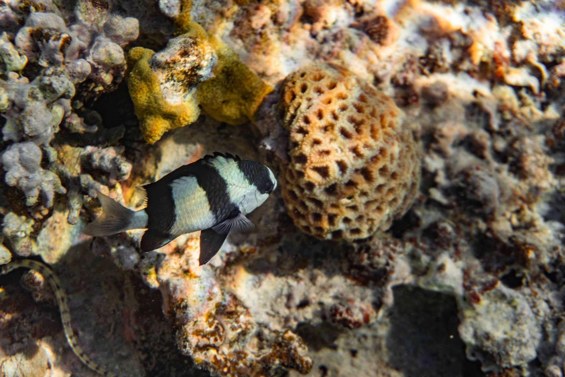 South Beach Japanese Gardens Aqaba Red Sea Snorkeling 2