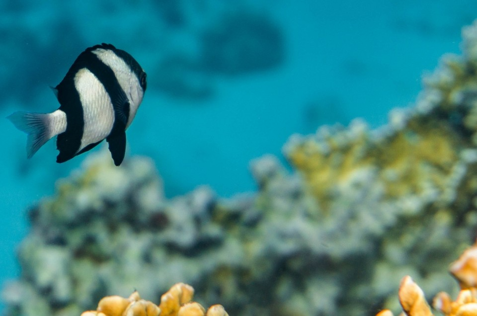 South Beach Japanese Gardens Aqaba Red Sea Snorkeling