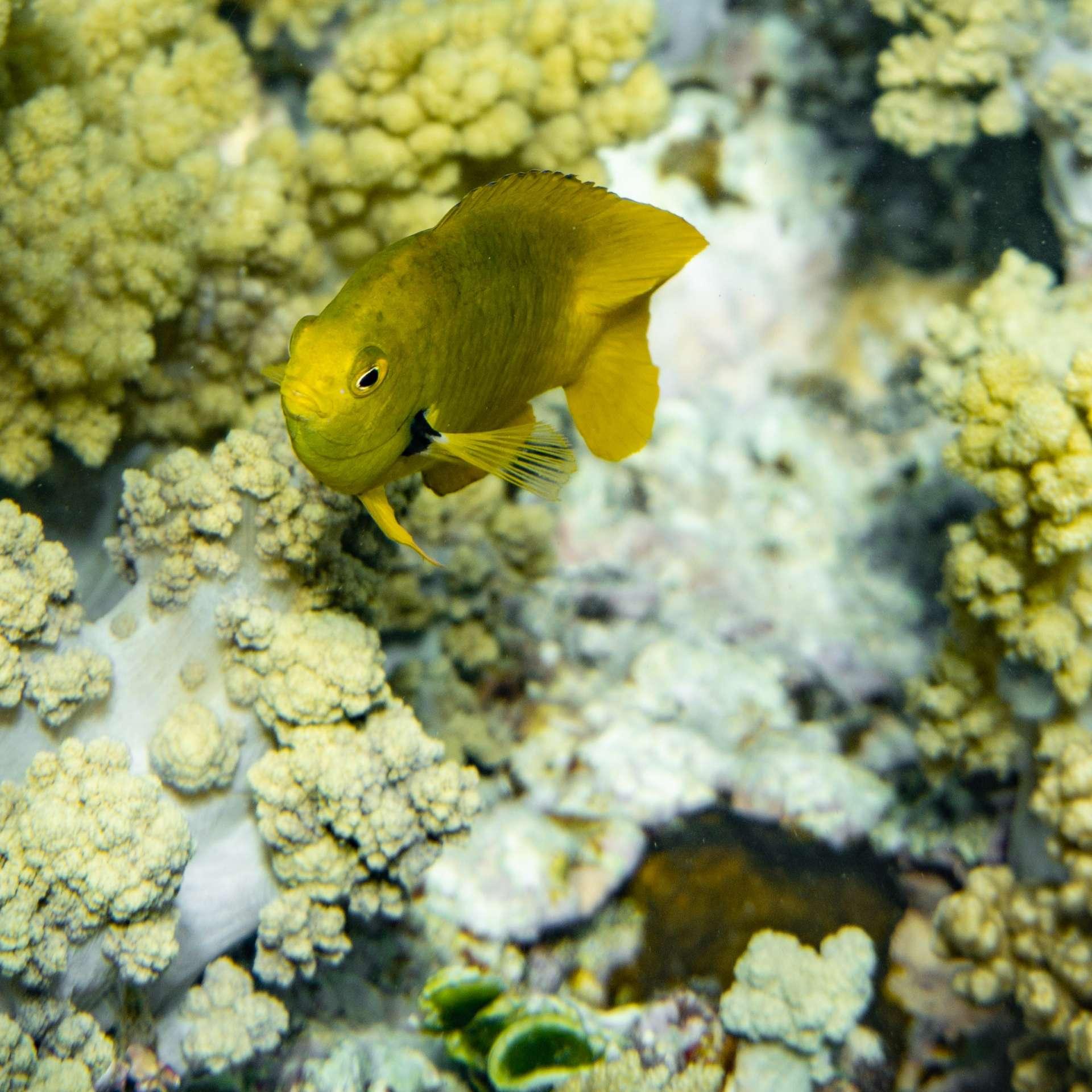 South Beach Japanese Gardens Aqaba Red Sea Snorkeling 3
