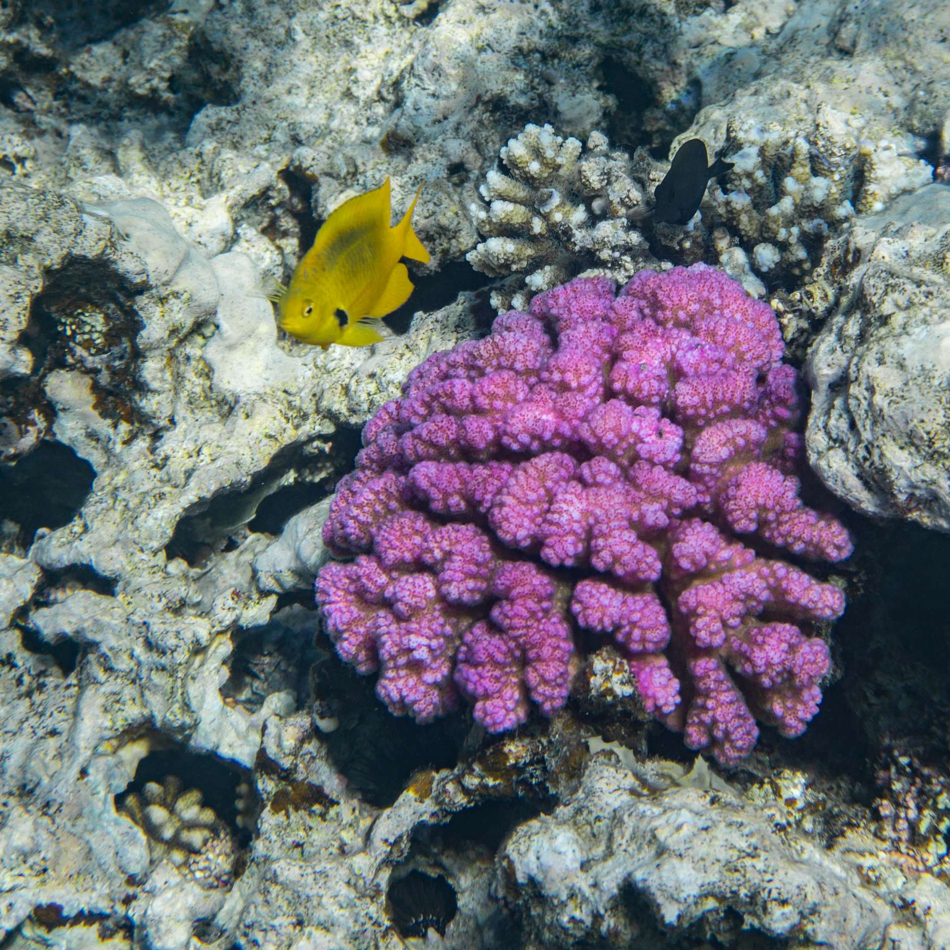 South Beach Japanese Gardens Aqaba Red Sea Snorkeling 4