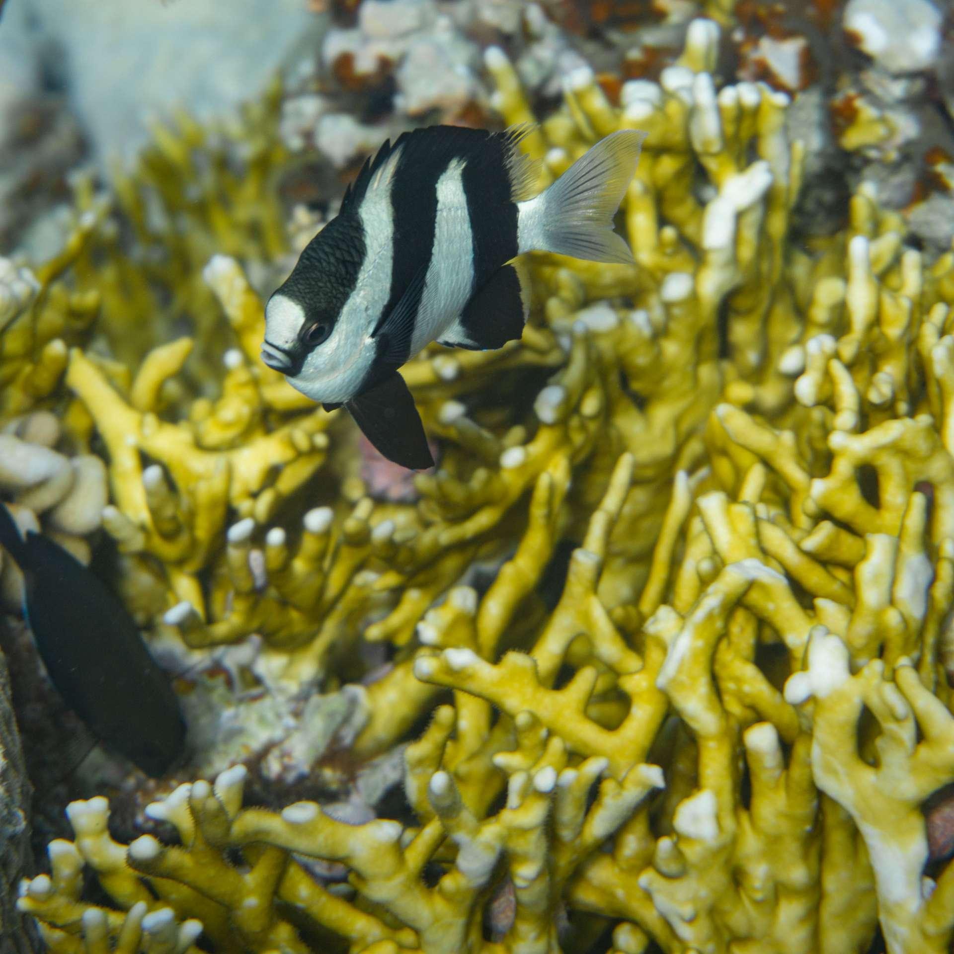 South Beach Japanese Gardens Aqaba Red Sea Snorkeling 5