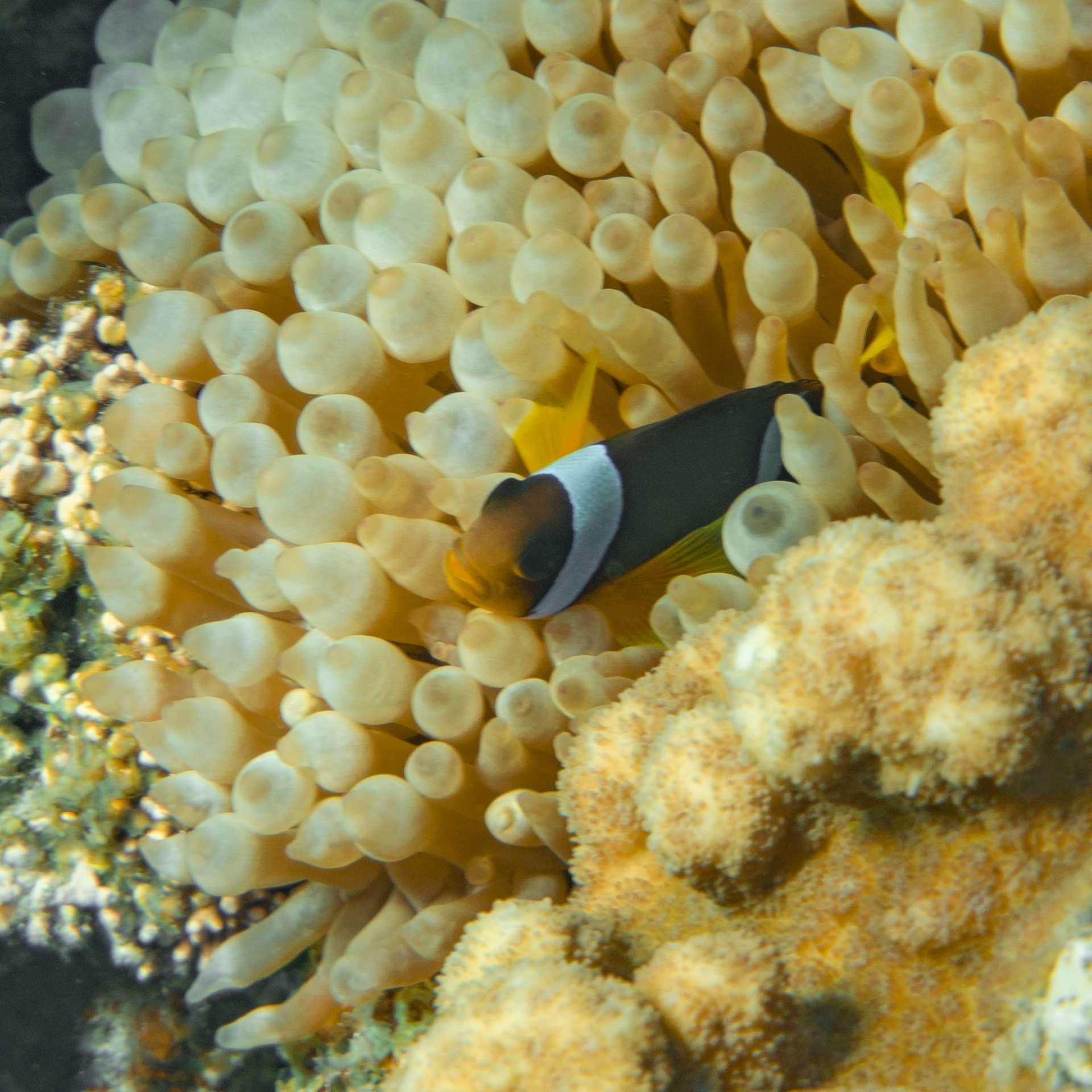 South Beach Japanese Gardens Aqaba Red Sea Snorkeling 6