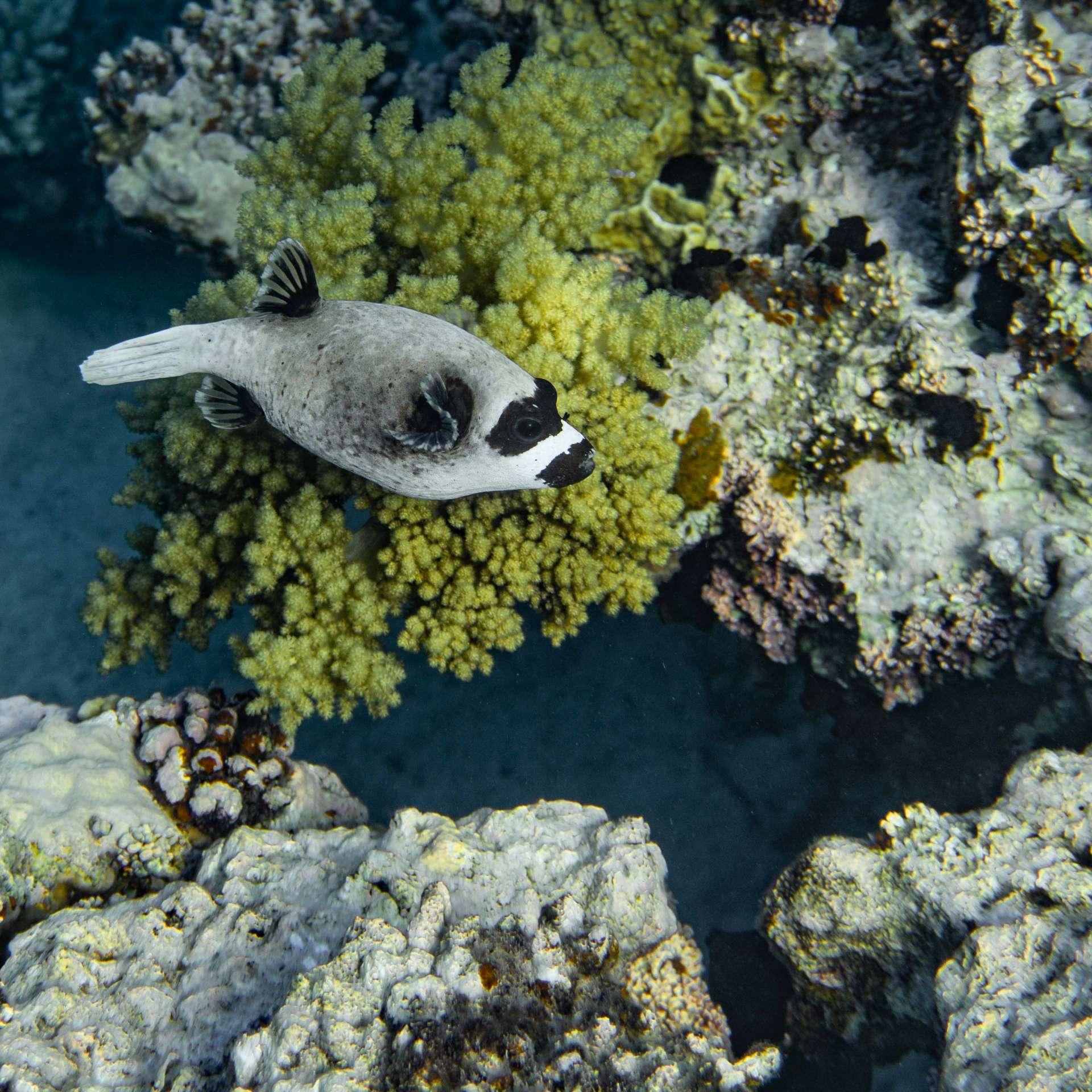 South Beach Japanese Gardens Aqaba Red Sea Snorkeling 7