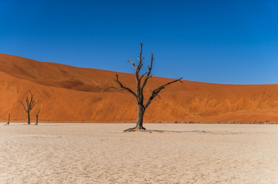 Namibia: a wonder of Wildlife and Nature