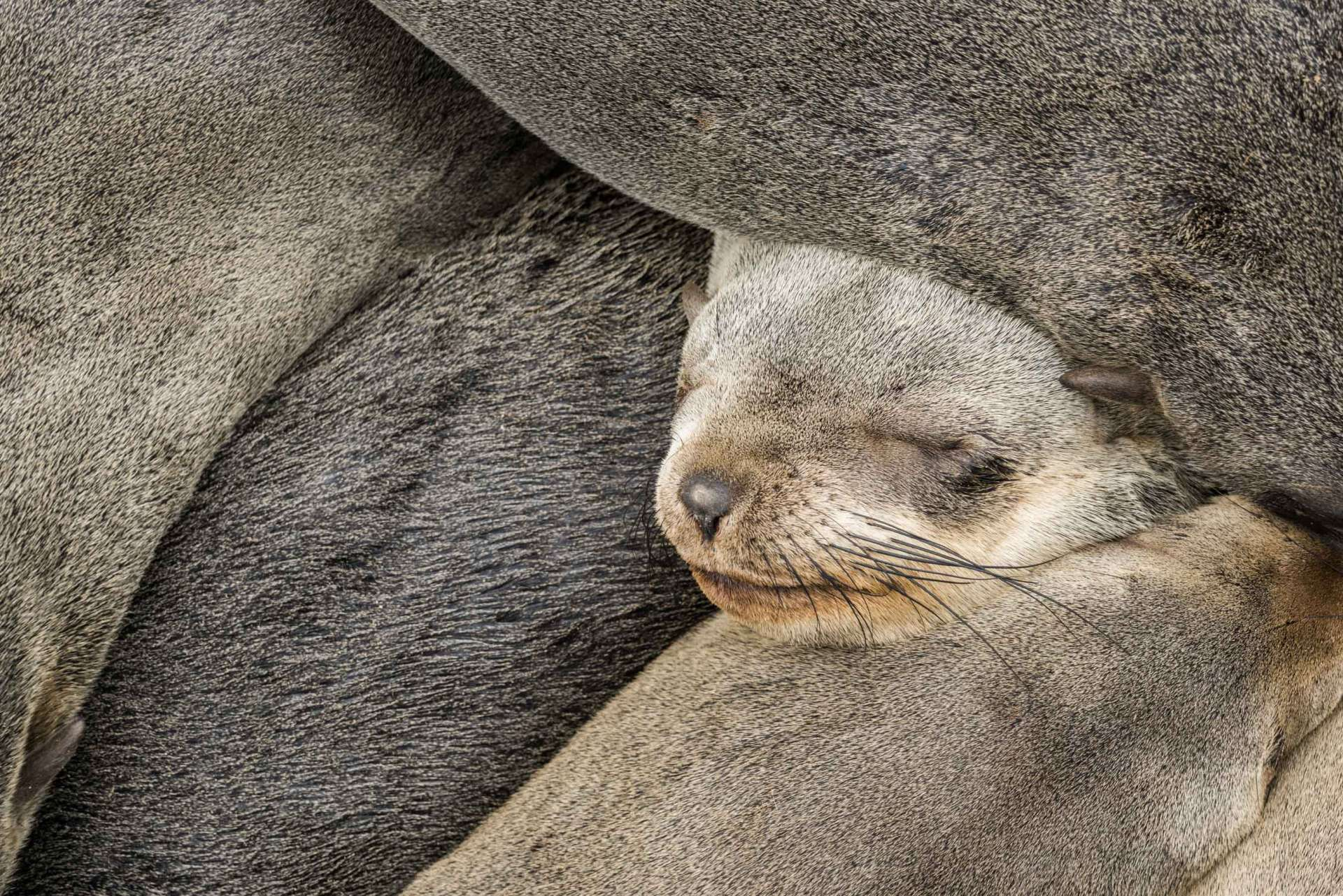 Namibia Enrico Pescantini Travel Photographer wildlife nature cape cross seals