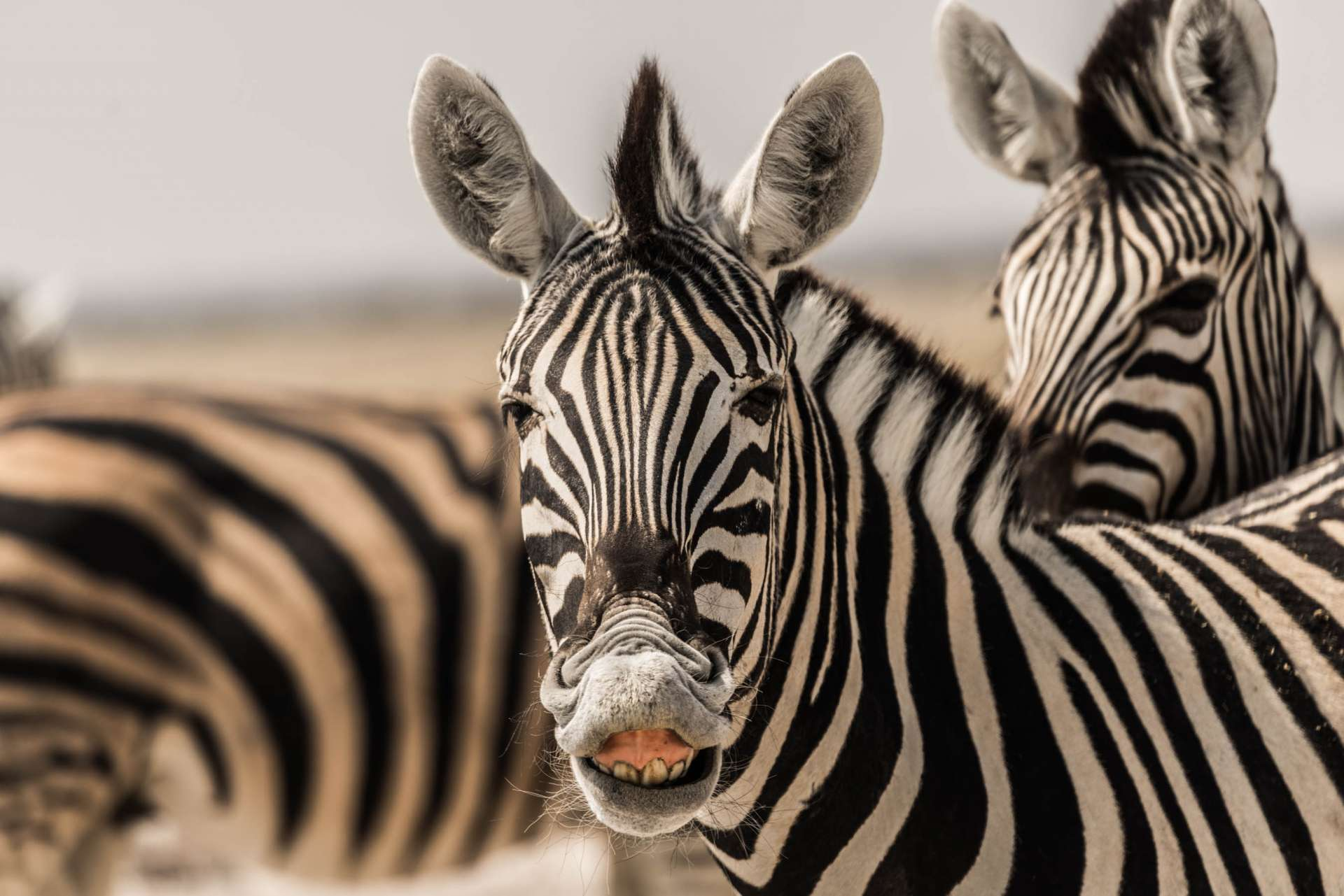 Namibia Enrico Pescantini Travel Photographer wildlife nature etosha smiling zebra