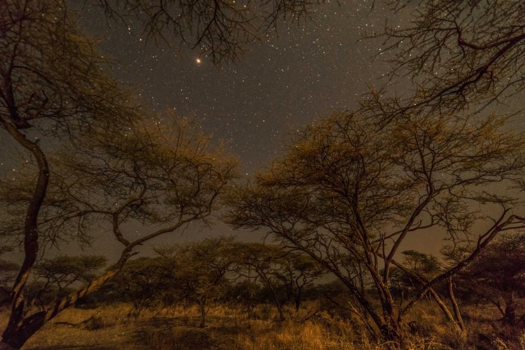 Namibia Enrico Pescantini Travel Photographer wildlife nature etosha sleeping in savannah