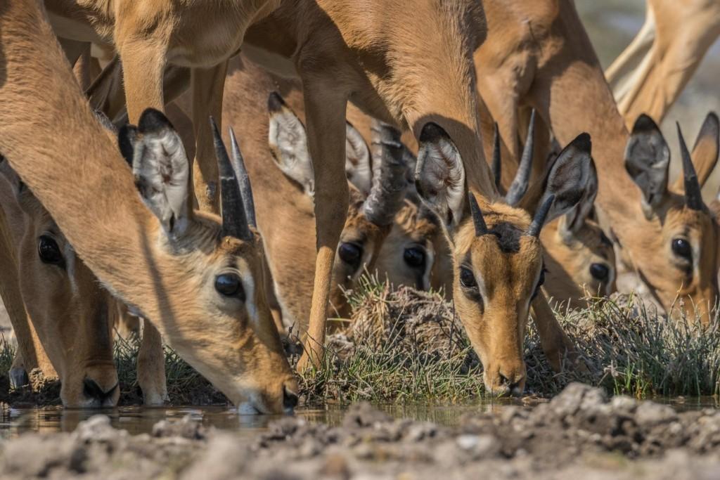 Namibia Enrico Pescantini Travel Photographer wildlife nature etosha impala