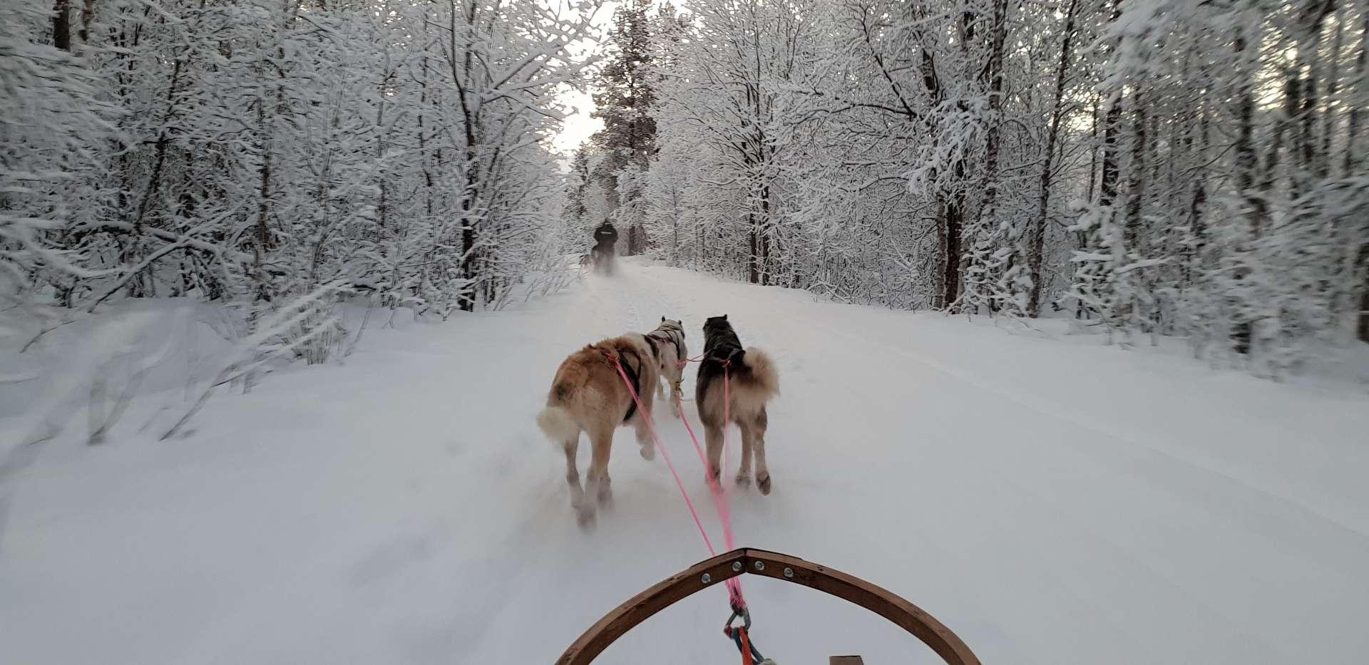 Tromso Dog Sledding hasselberg husky norway