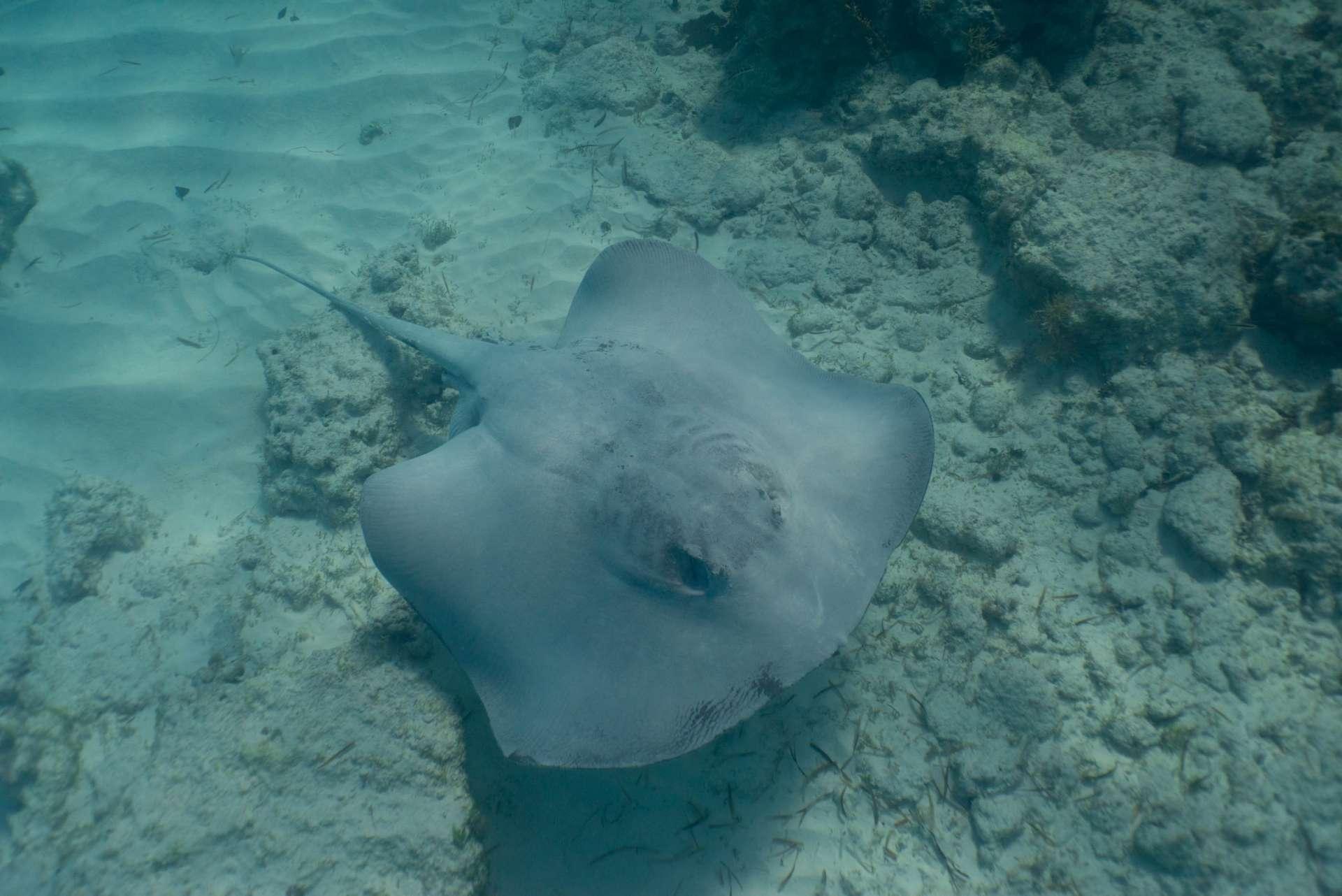 Bahamas Long Island snorkeling cape santa maria beach 9